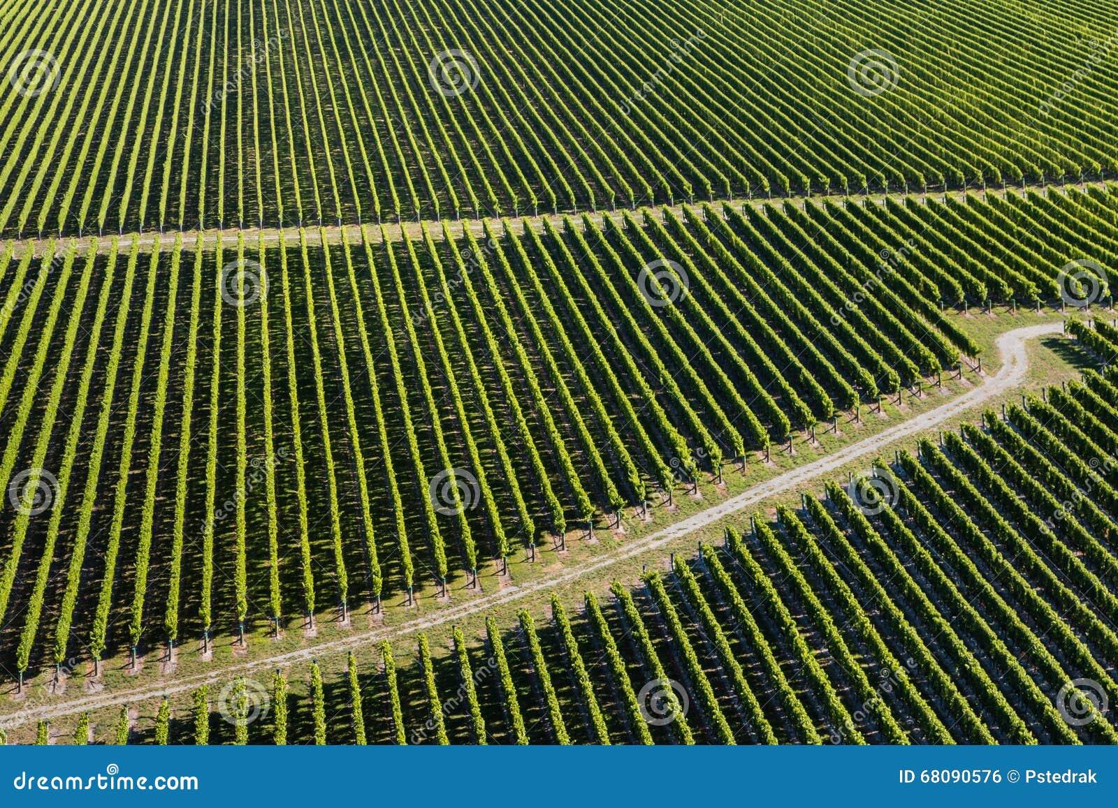 Vista aérea dos vinhedos
