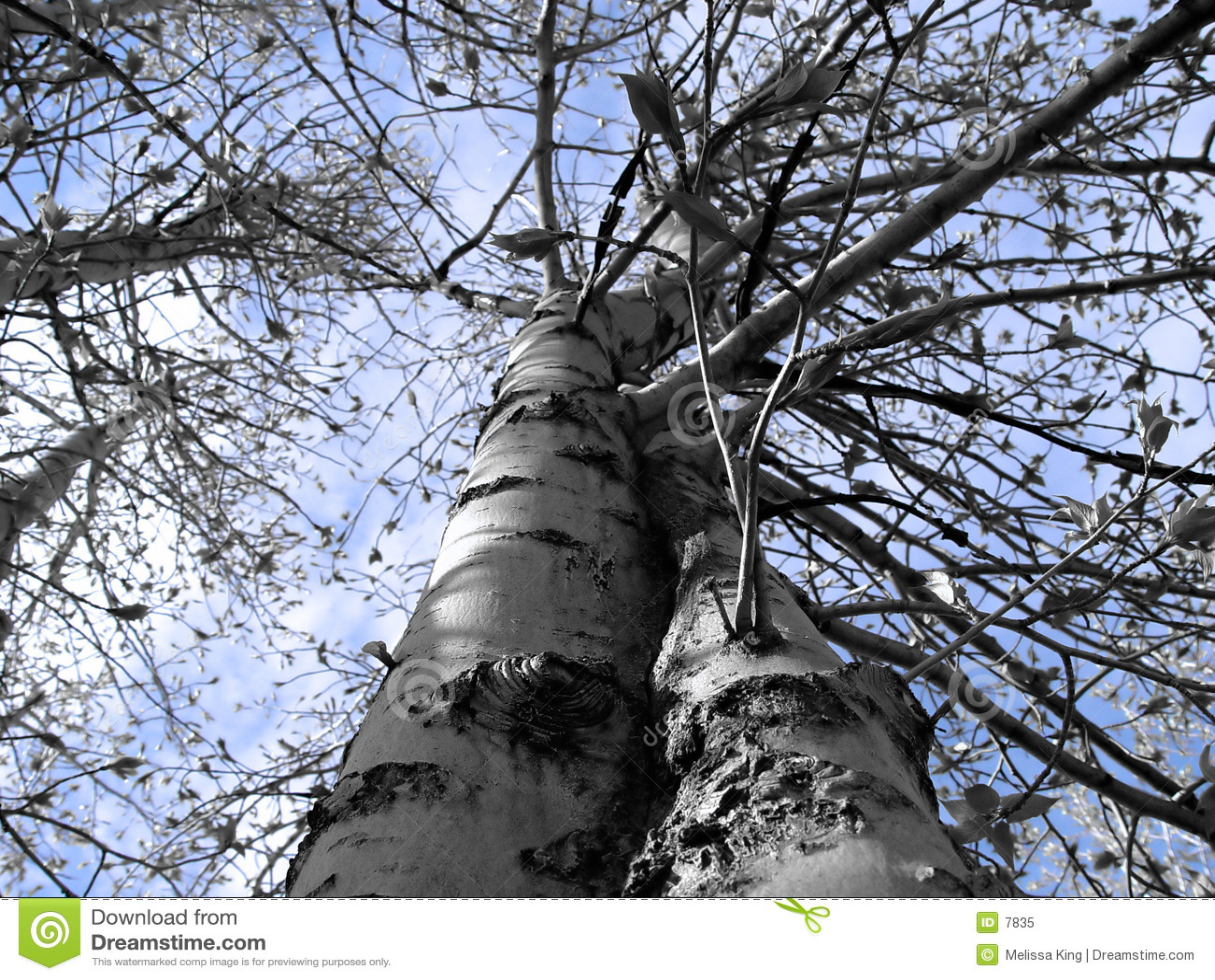 Vista abstracta del árbol