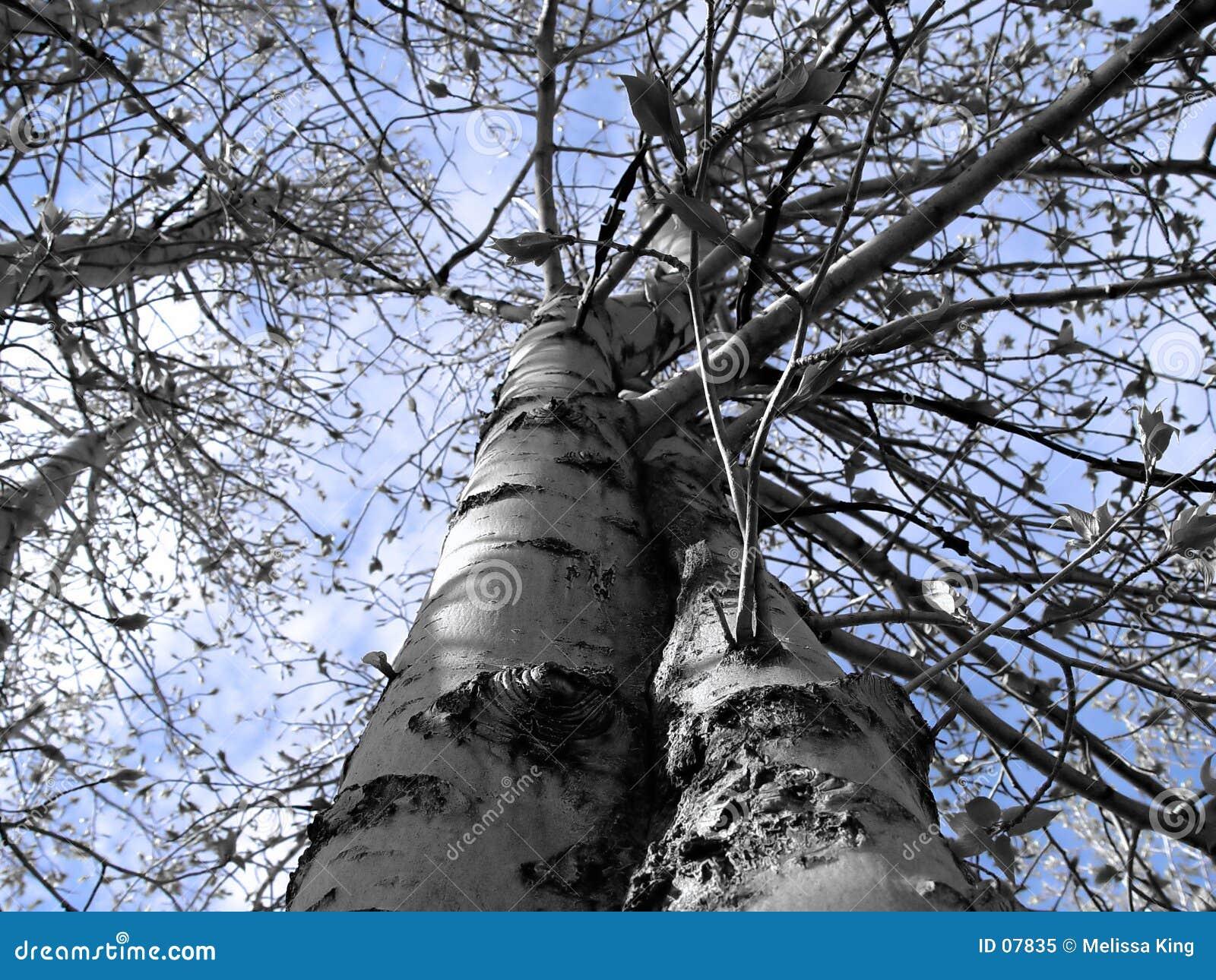Vista abstrata da árvore
