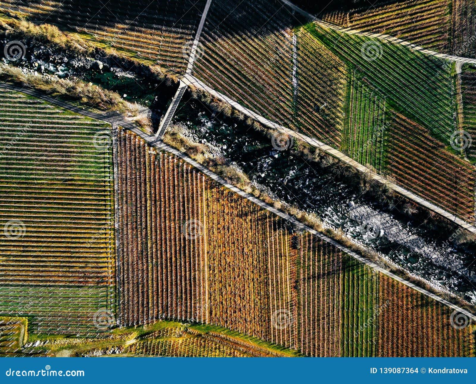 Vista aerea dei campi della vigna durante l inverno in Italia