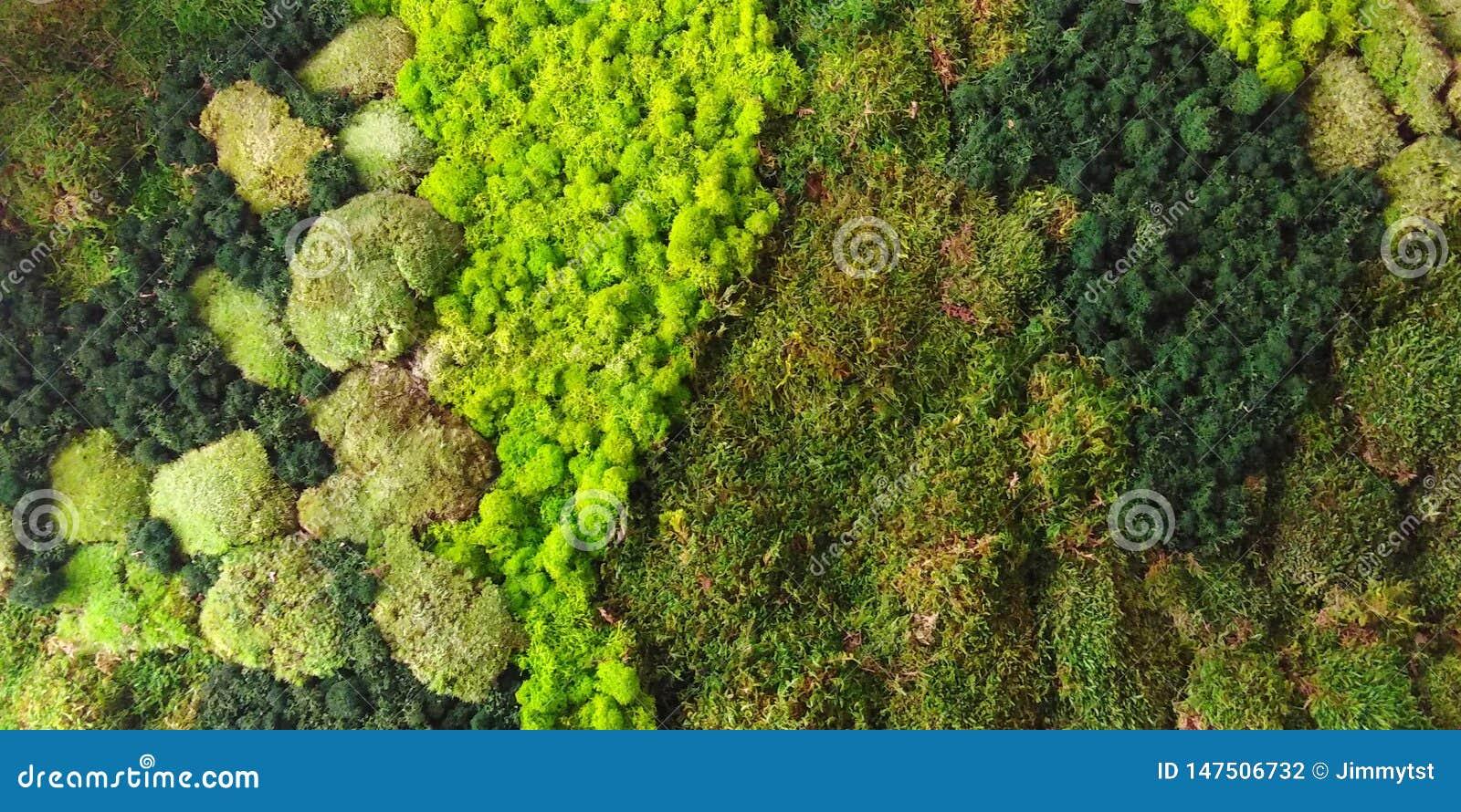Vista aerea del modello della vegetazione boschiva   struttura del fondo