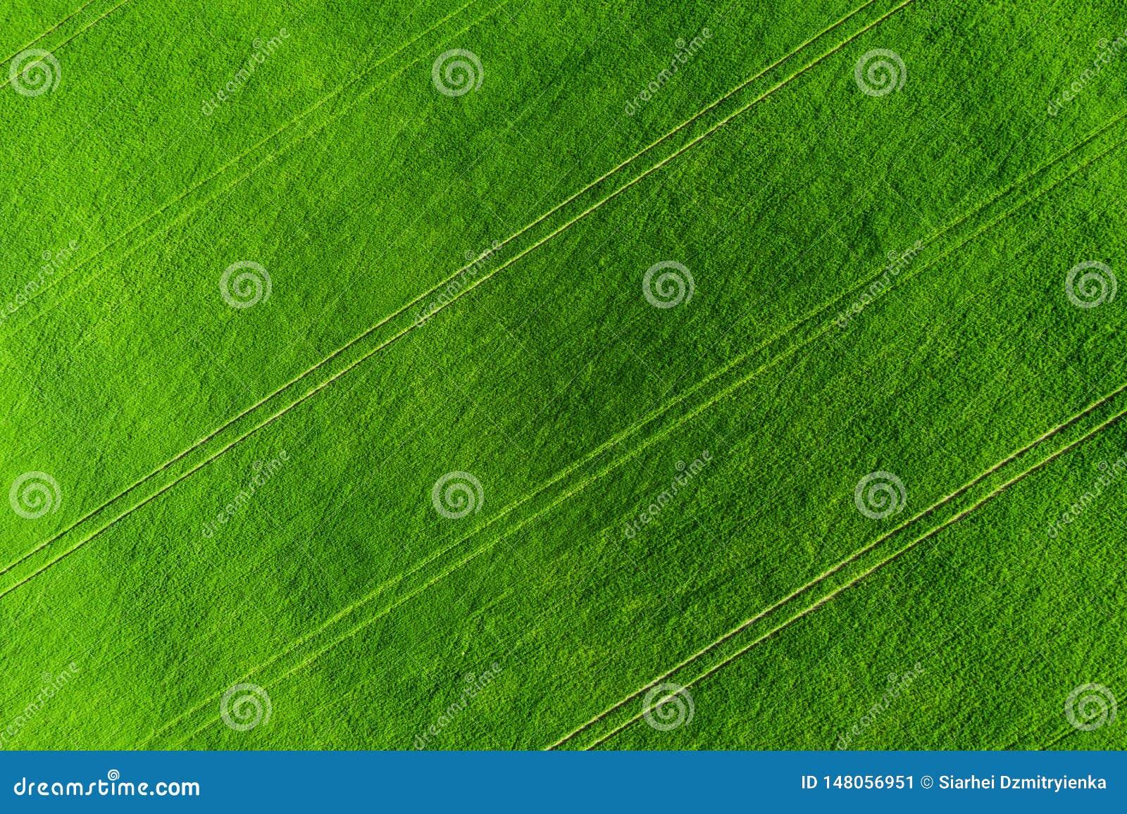 Vista aerea verde del fondo del campo Prato di agricoltura da sopra Campi agricoli di estate