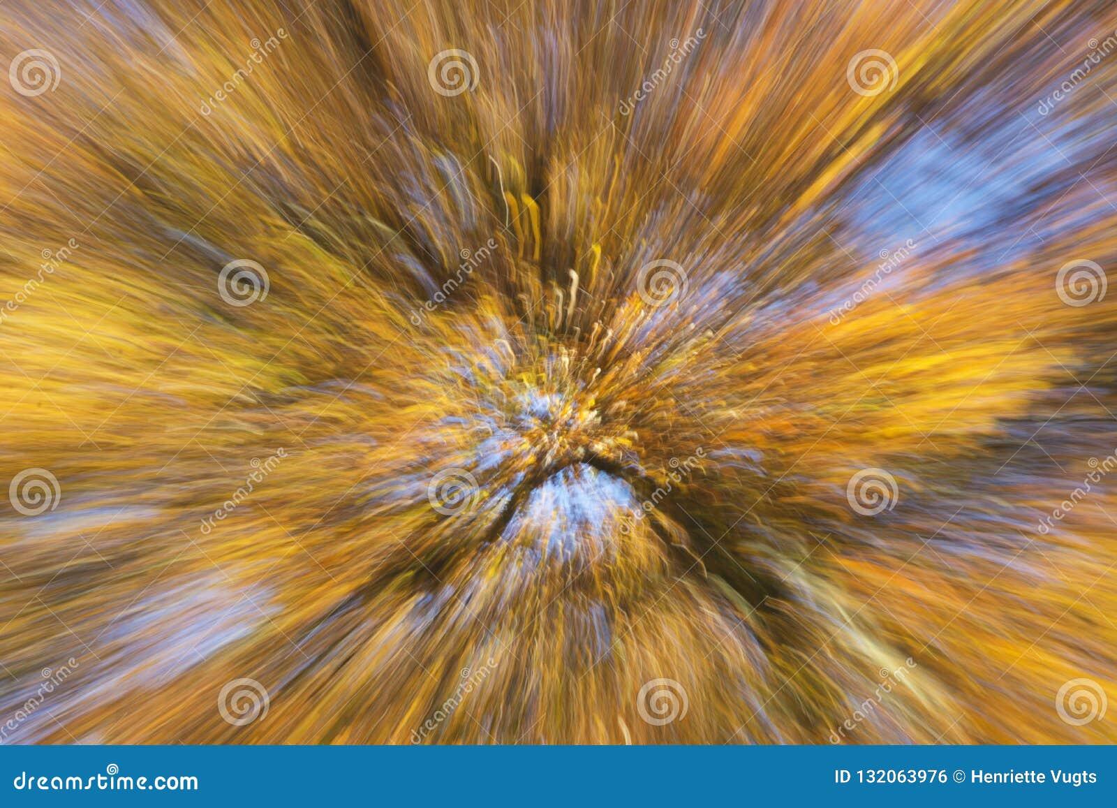 Vista artistica su un bello albero con i rami pieni di esplosione delle foglie di autunno arancio e gialle