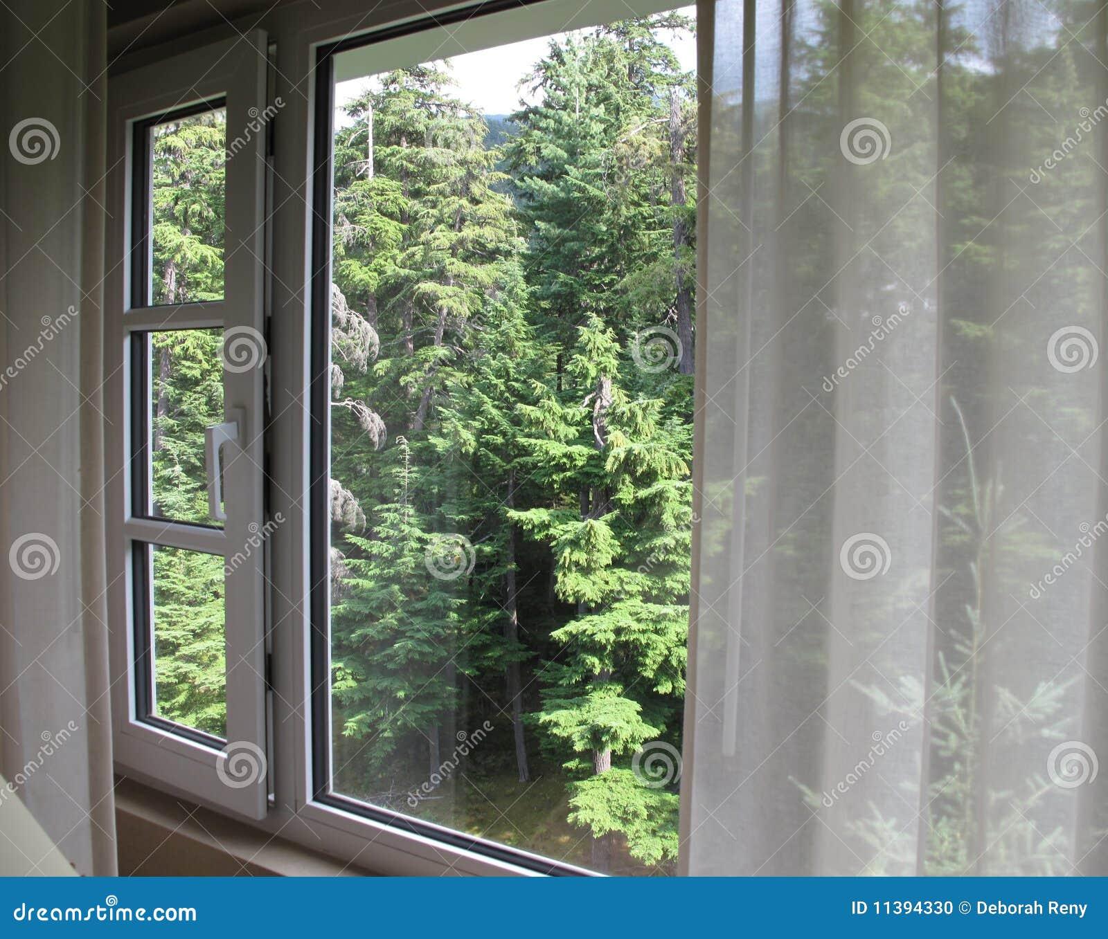 Vista attraverso la finestra agli alberi sempreverdi fotografia stock immagine 11394330 - La finestra biz ...