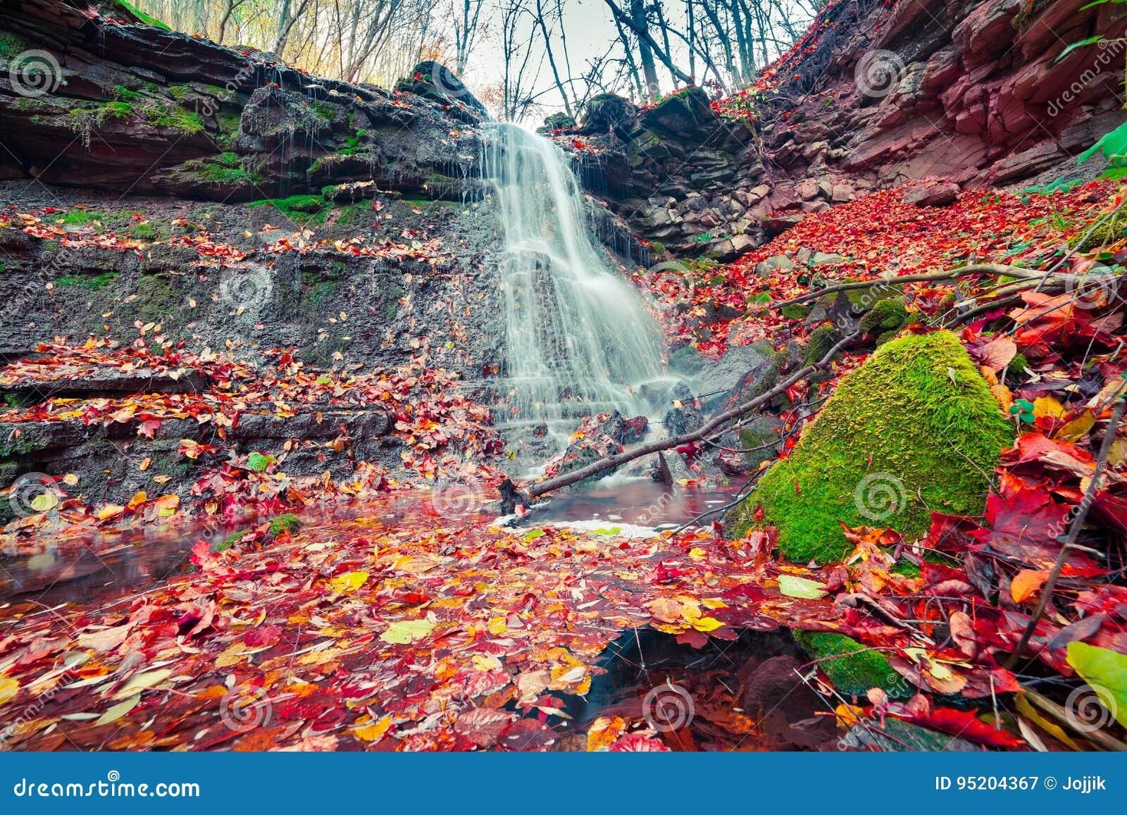 Vista bonita da cachoeira pura da água na floresta do outono