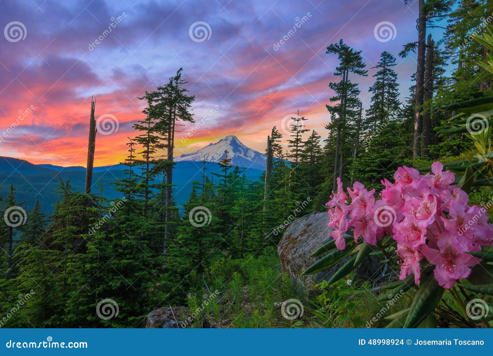 Vista bonito da capa da montagem em Oregon, EUA