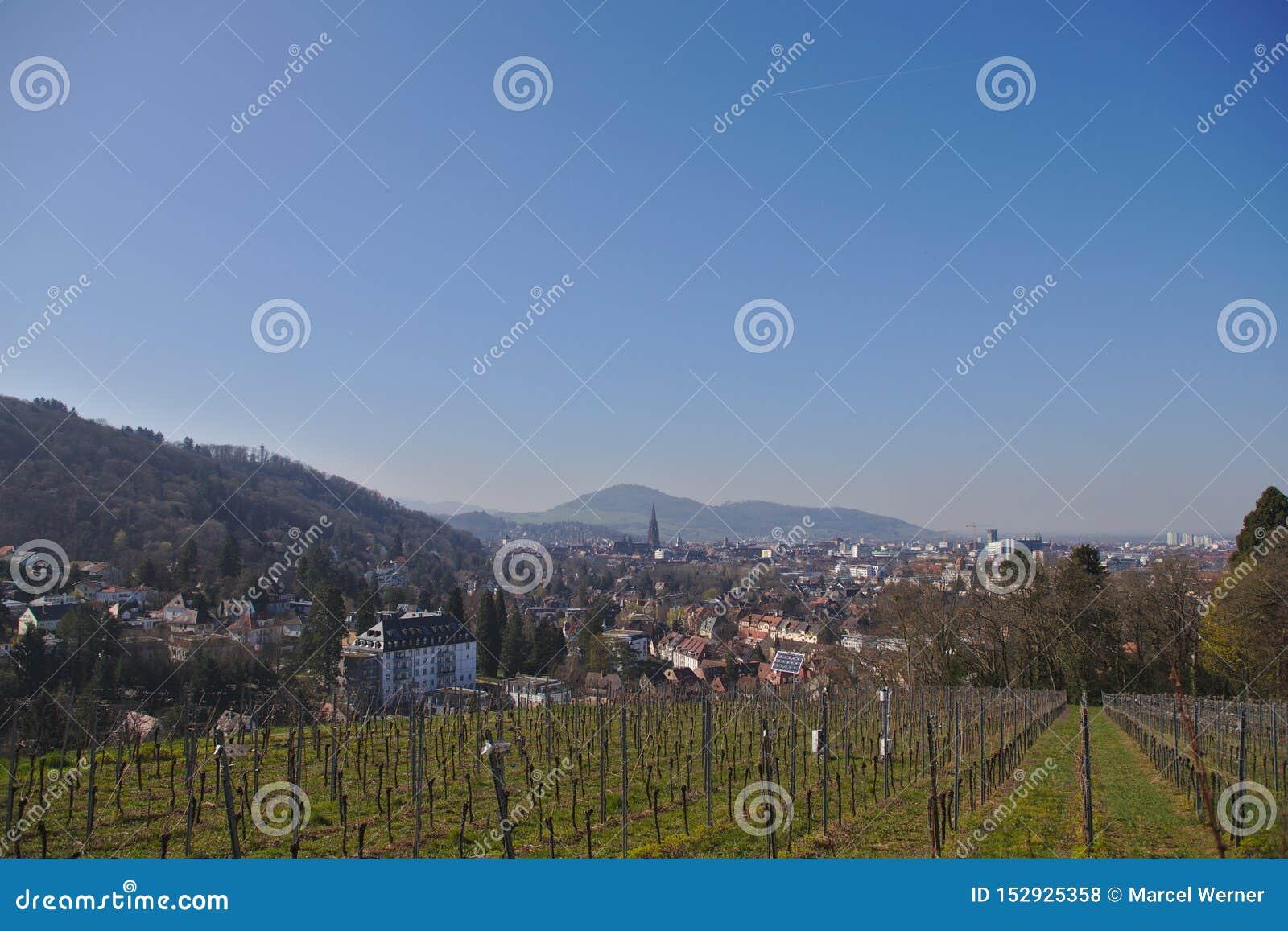 Vista de Freiburg-im-Breisgau de un viñedo