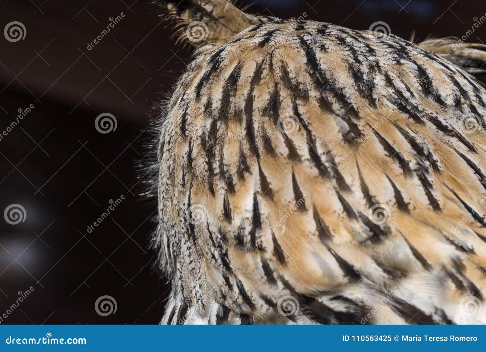 Vista de la cabeza de un búho de detrás