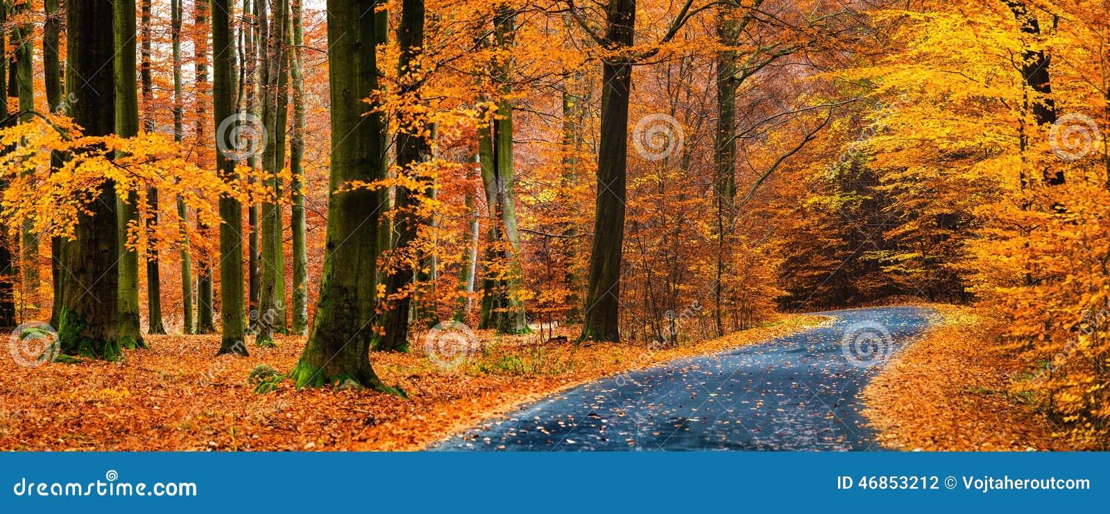 Vista de la carretera de asfalto en bosque de oro hermoso de la haya durante otoño