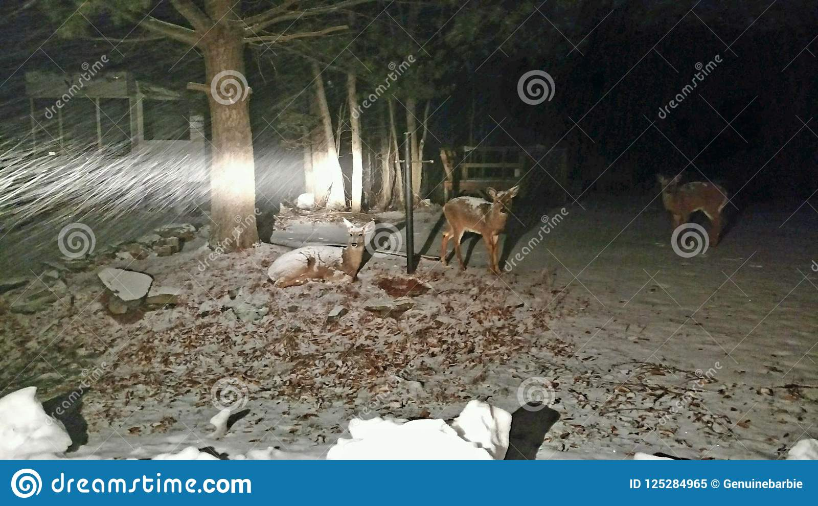 Vista de los ciervos