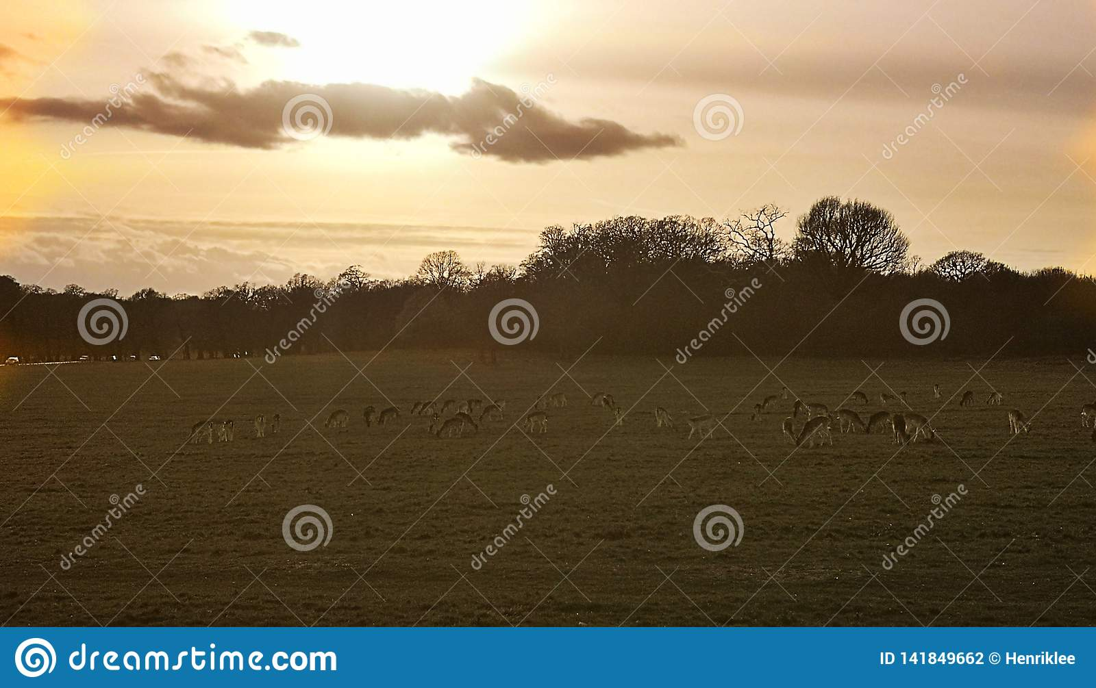 Vista de los ciervos en la puesta del sol en Richmond Park, Londres