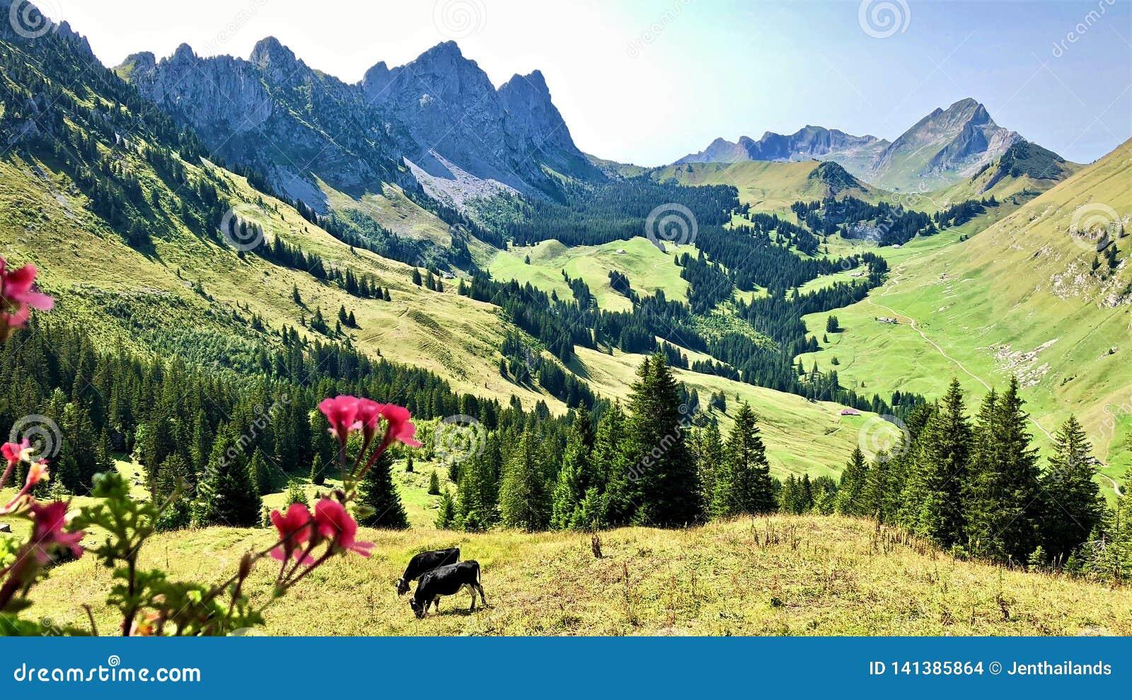 Vista de surpresa de montanhas suíças