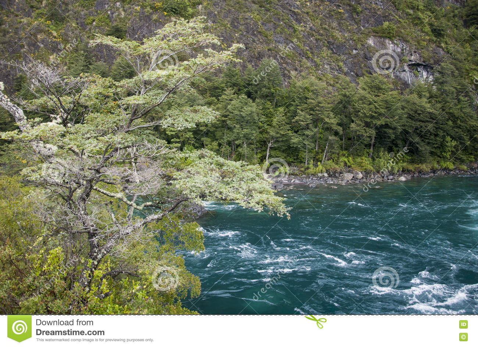 Vista de Vicente Perez Rosales National Park - Chile