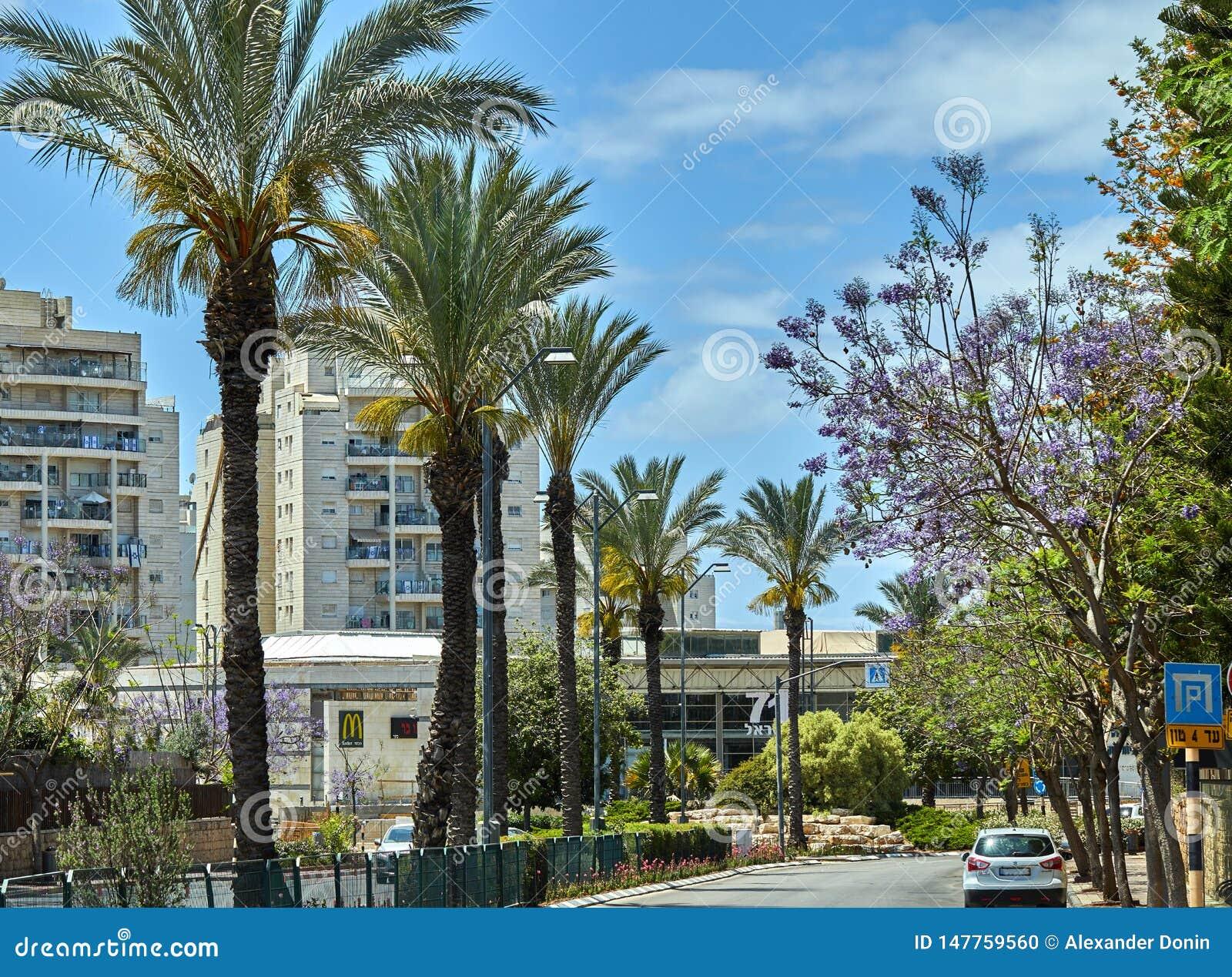Vista del callej?n de la ciudad con las palmeras contra el cielo azul con las nubes