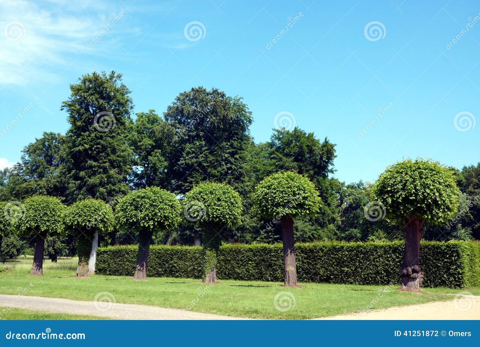 Vista del giardino con gli alberi fotografia stock - Prezzi alberi da giardino ...