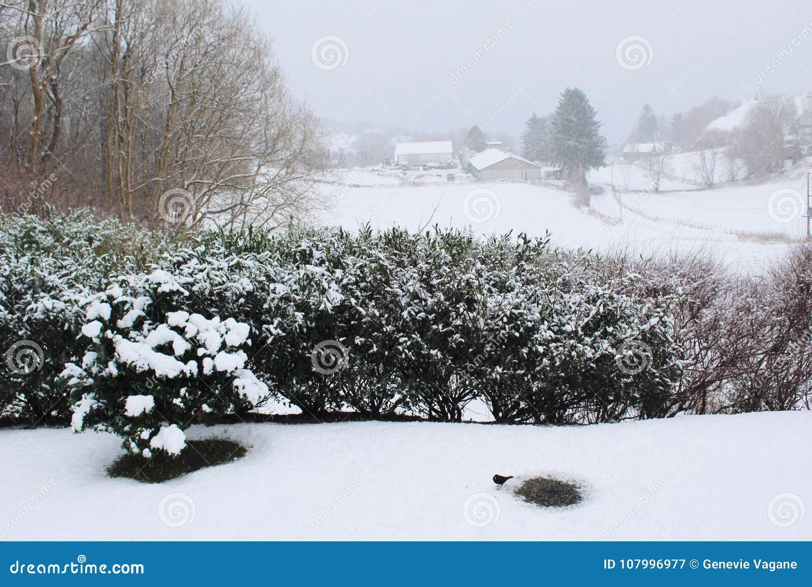 Vista del giardino sull inverno