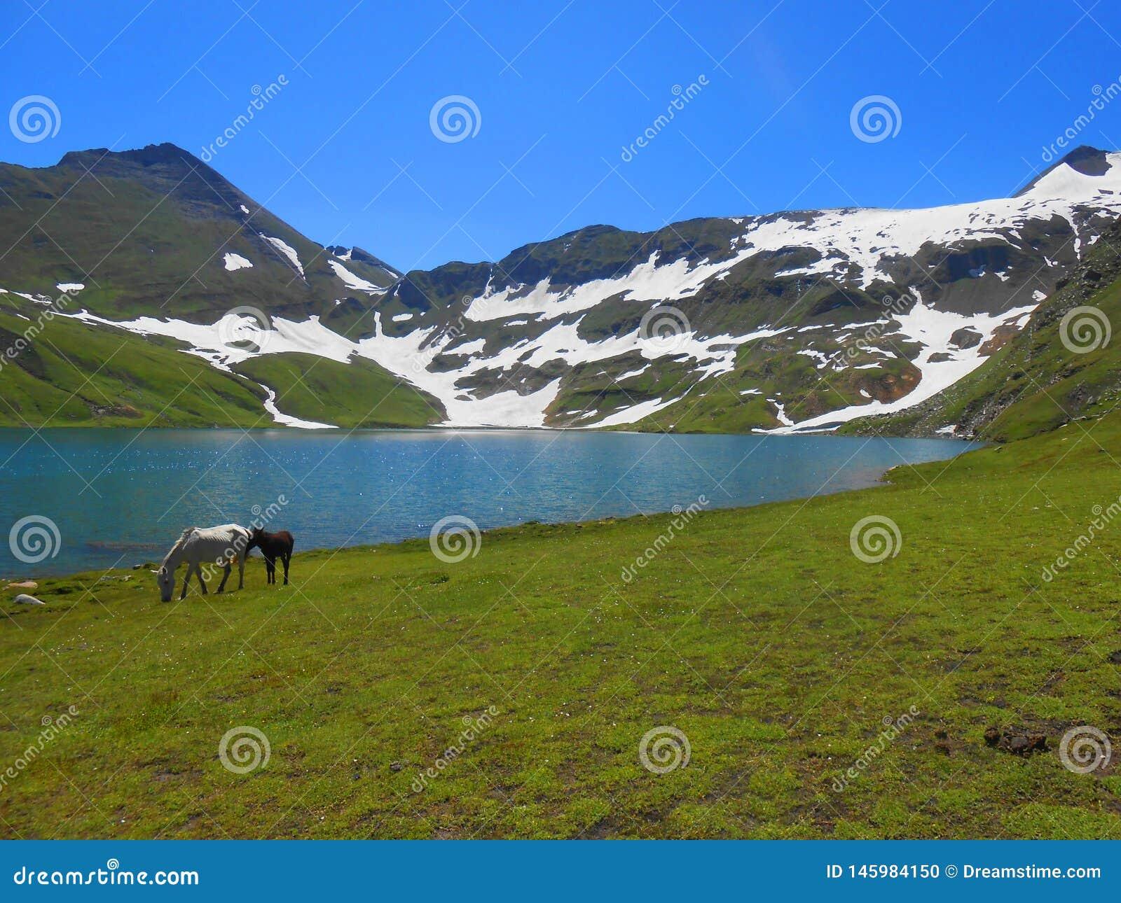 Vista del lago Dusdhipatsar bella con i cavalli