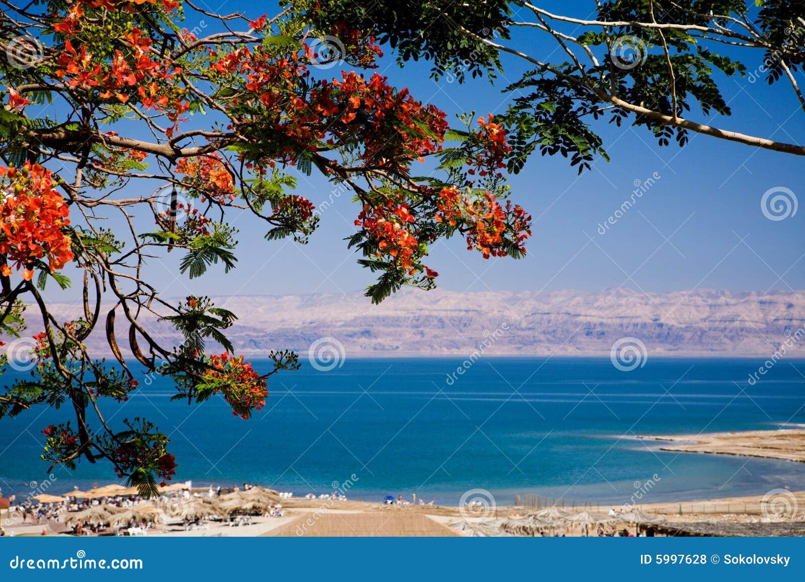 Vista del mare guasto, Israele