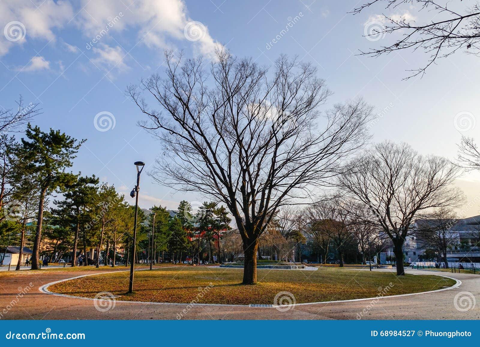 Vista del parque con muchos árboles en Kyoto, Japón