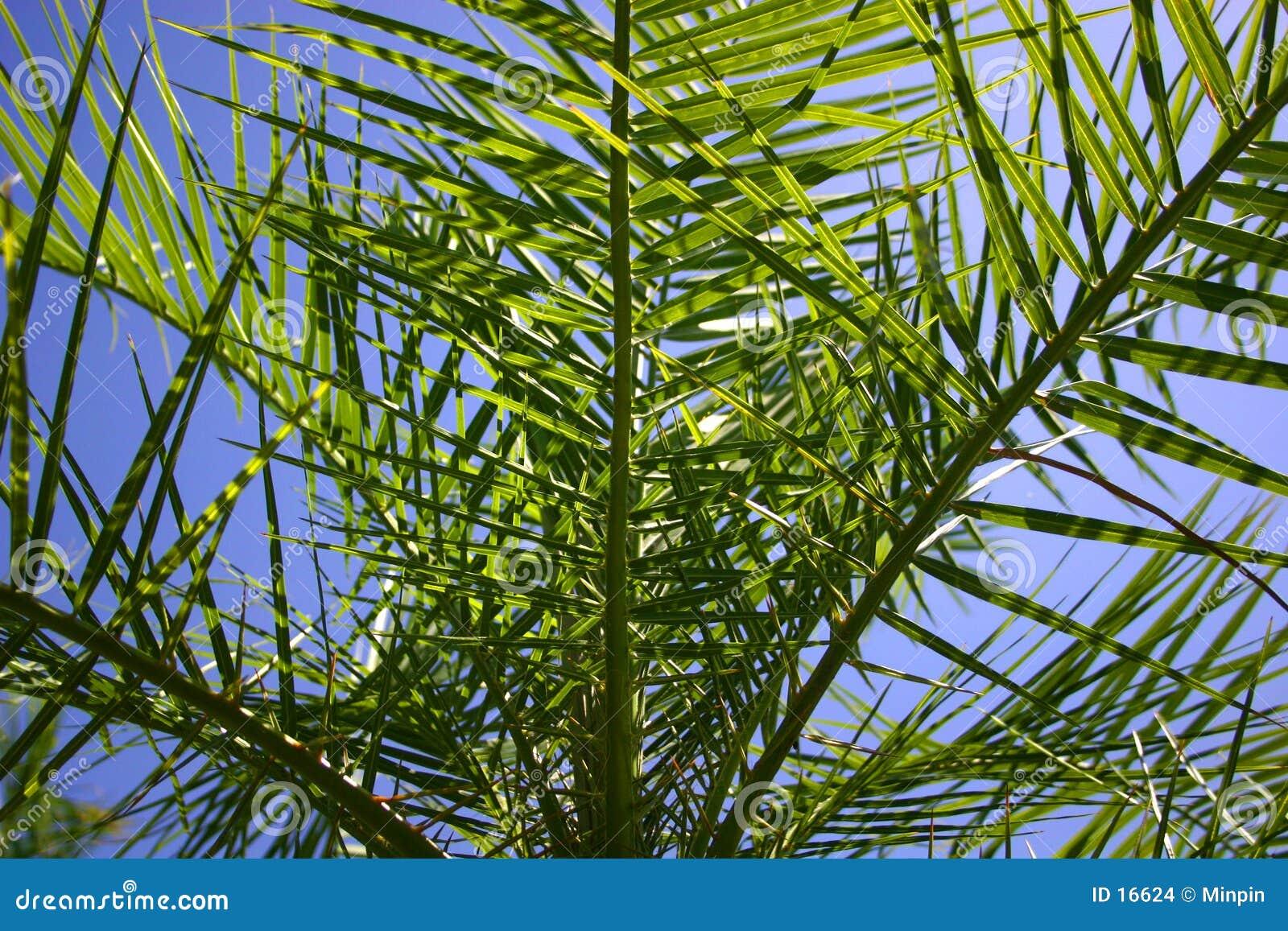 Vista dentro da palmeira