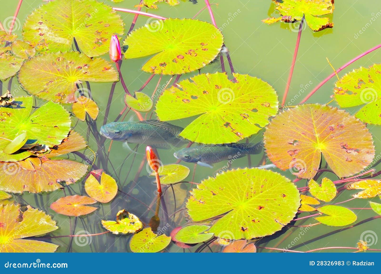 Vista di panorama dello stagno decorato immagine stock for Piante dello stagno