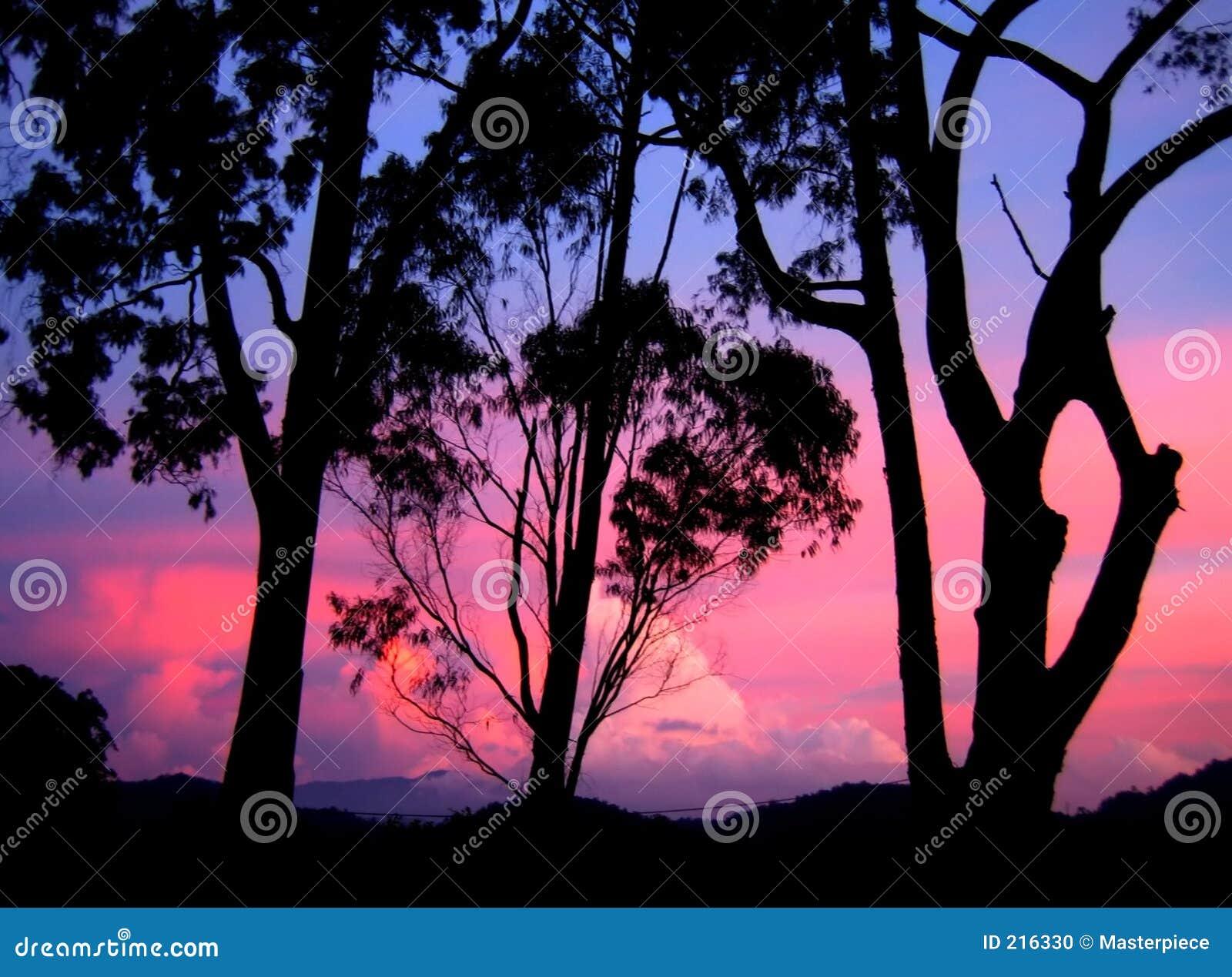 Vista di tramonto - silhoutte