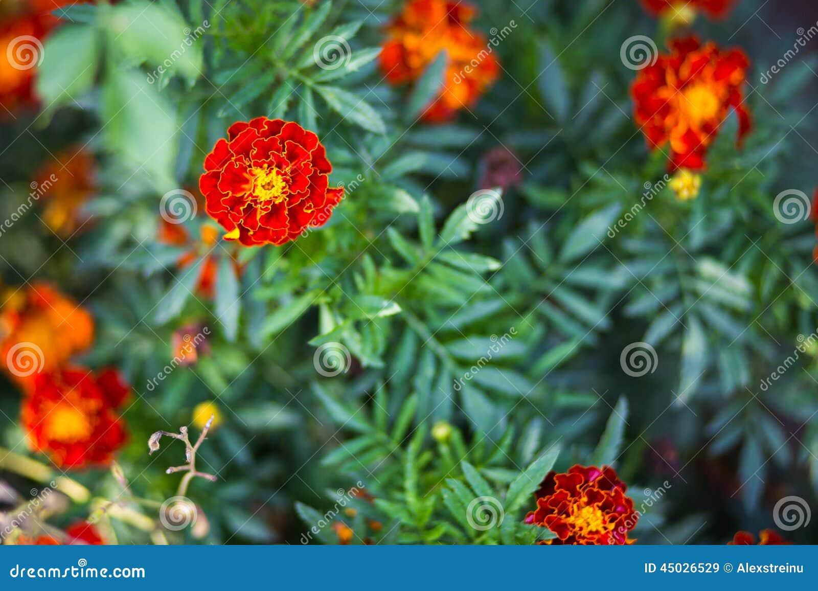 Pianta Semigrassa Con Fiori Arancioni ~ Idee Creative di Interni e Mobili