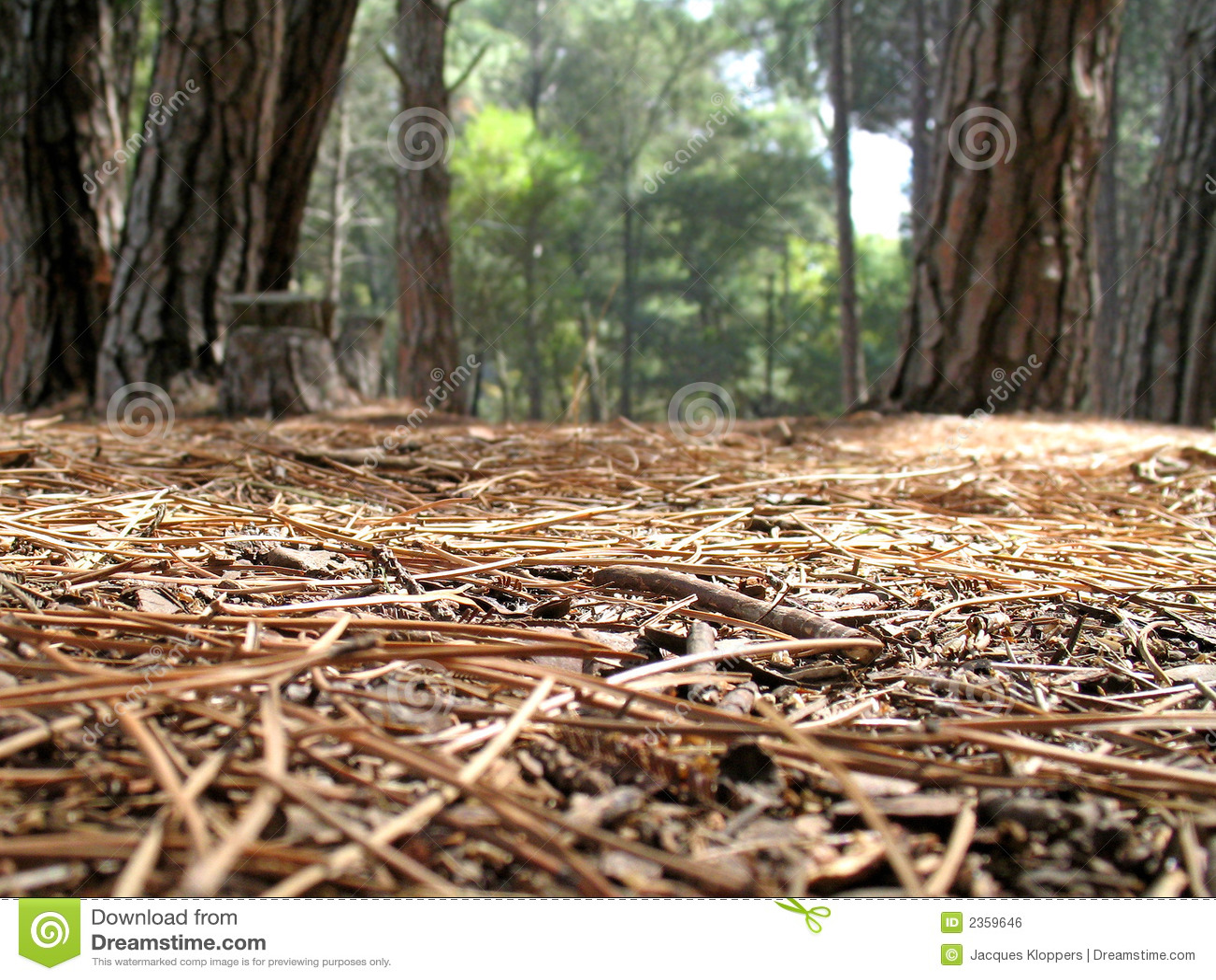 Vista do assoalho da floresta