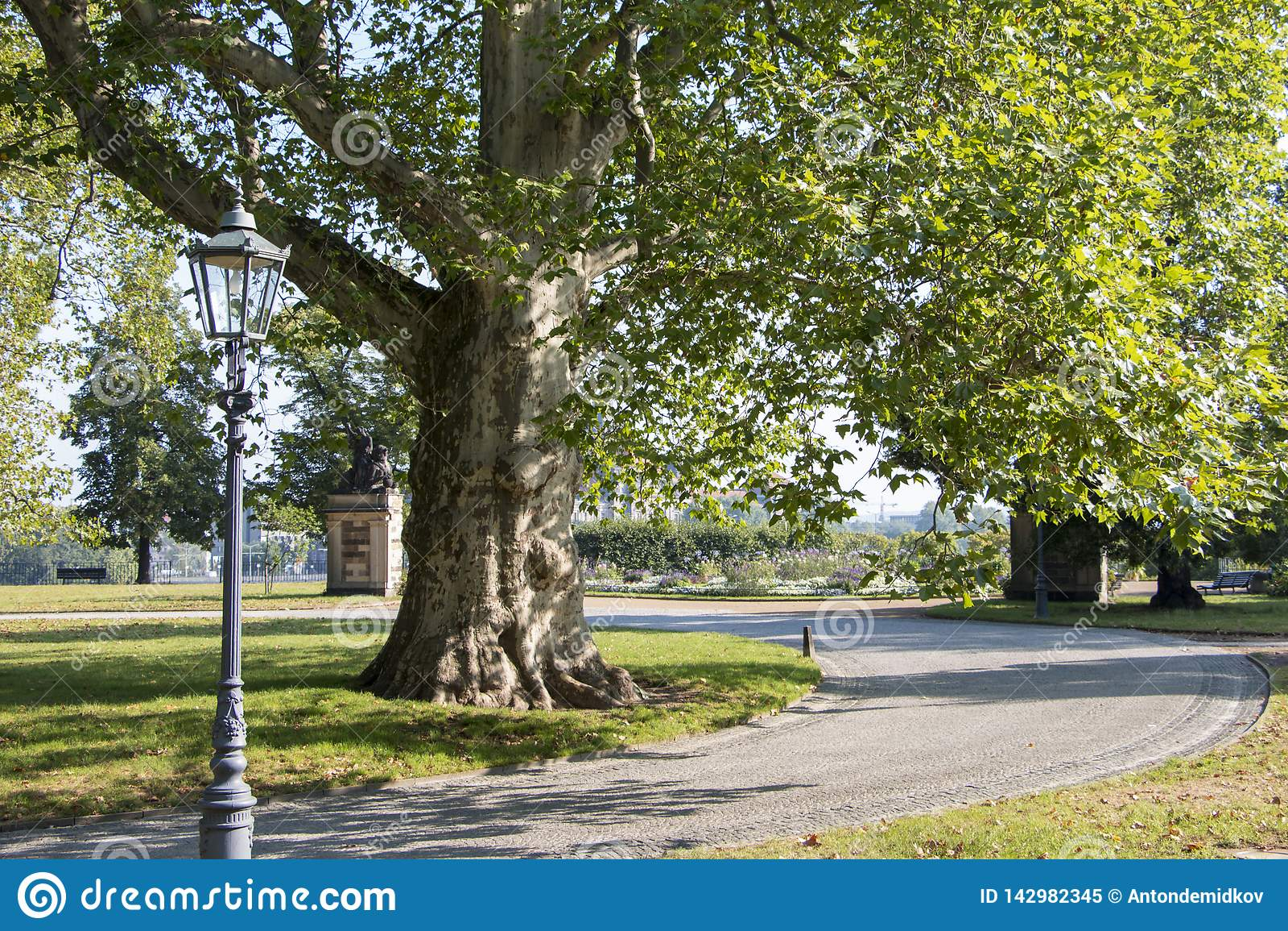 Vista emozionante della natura nel parco della città