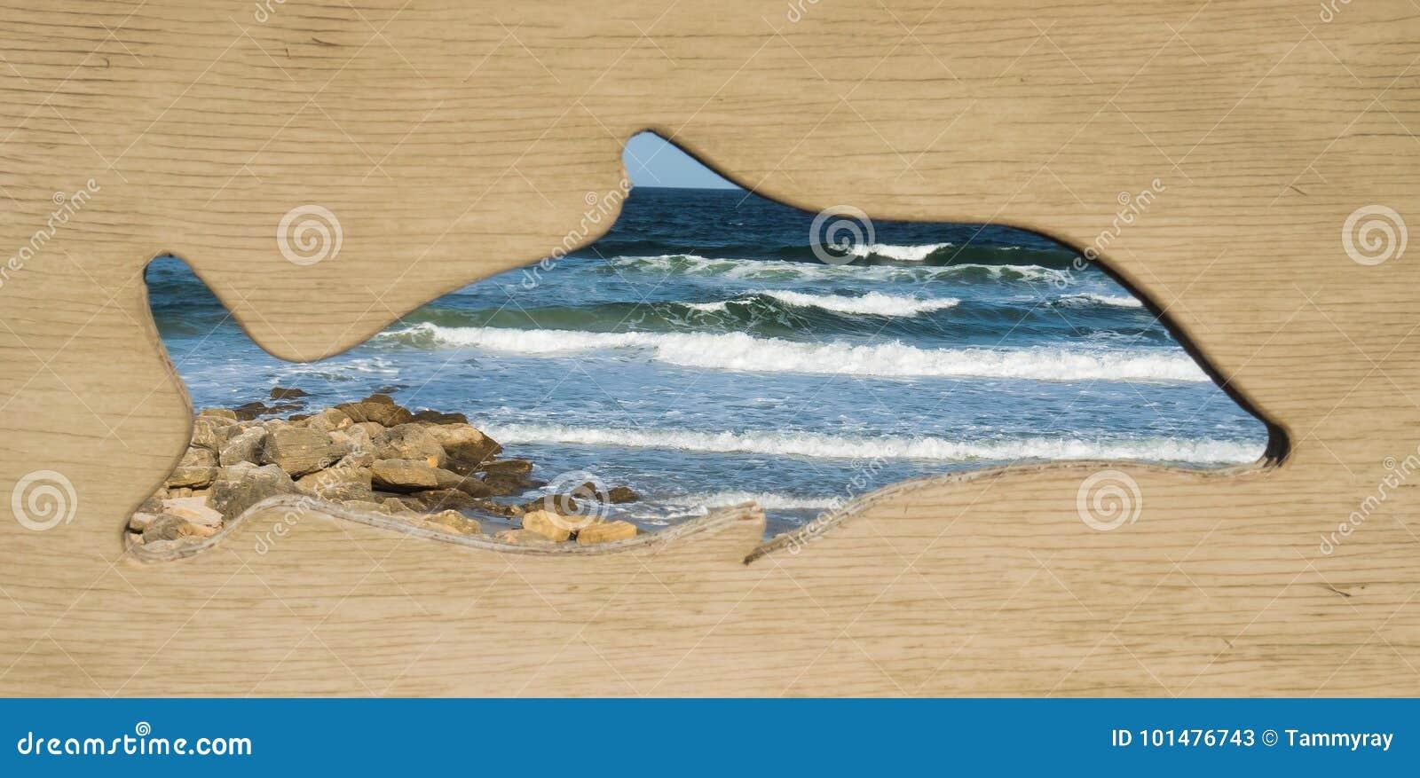 Vista Enmarcada Delfín Del Océano Imagen de archivo - Imagen de ...