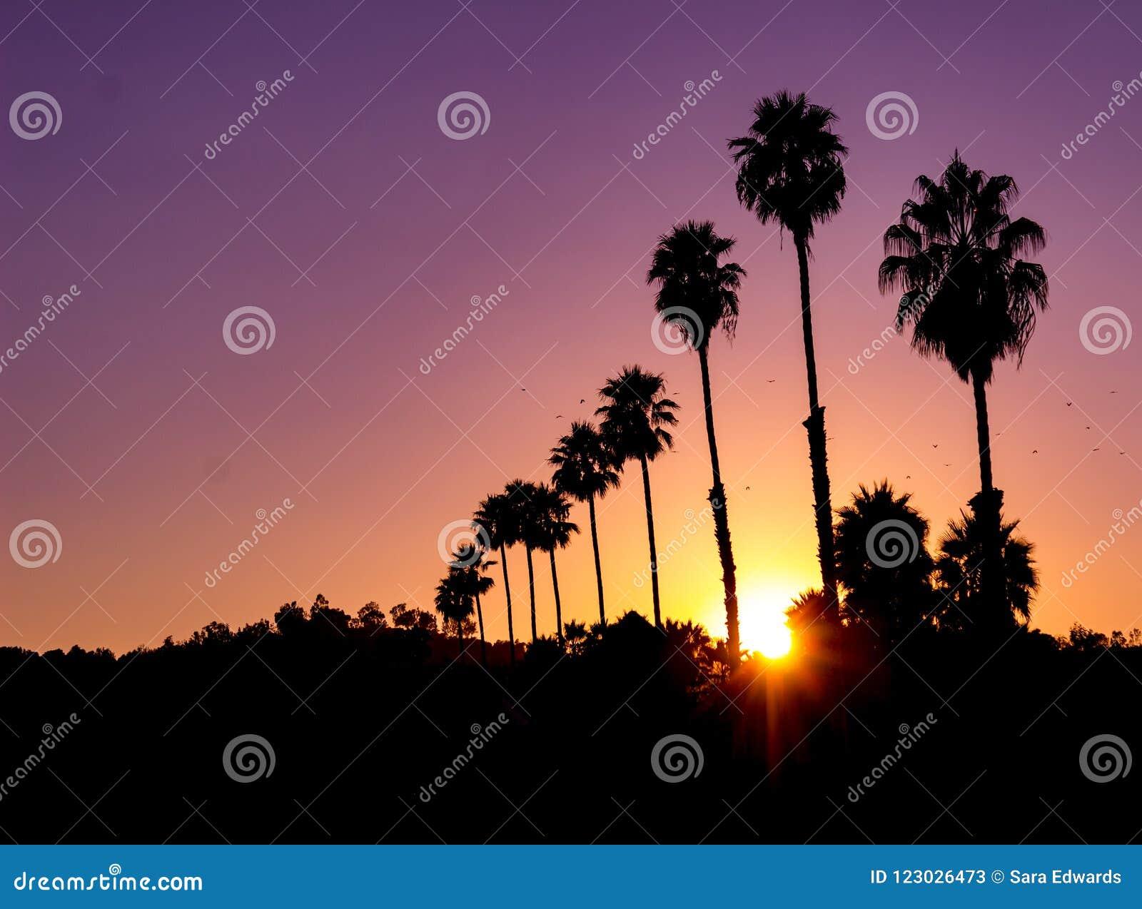 Vista horizontal de una puesta del sol viva con resplandor solar y la silueta de palmeras