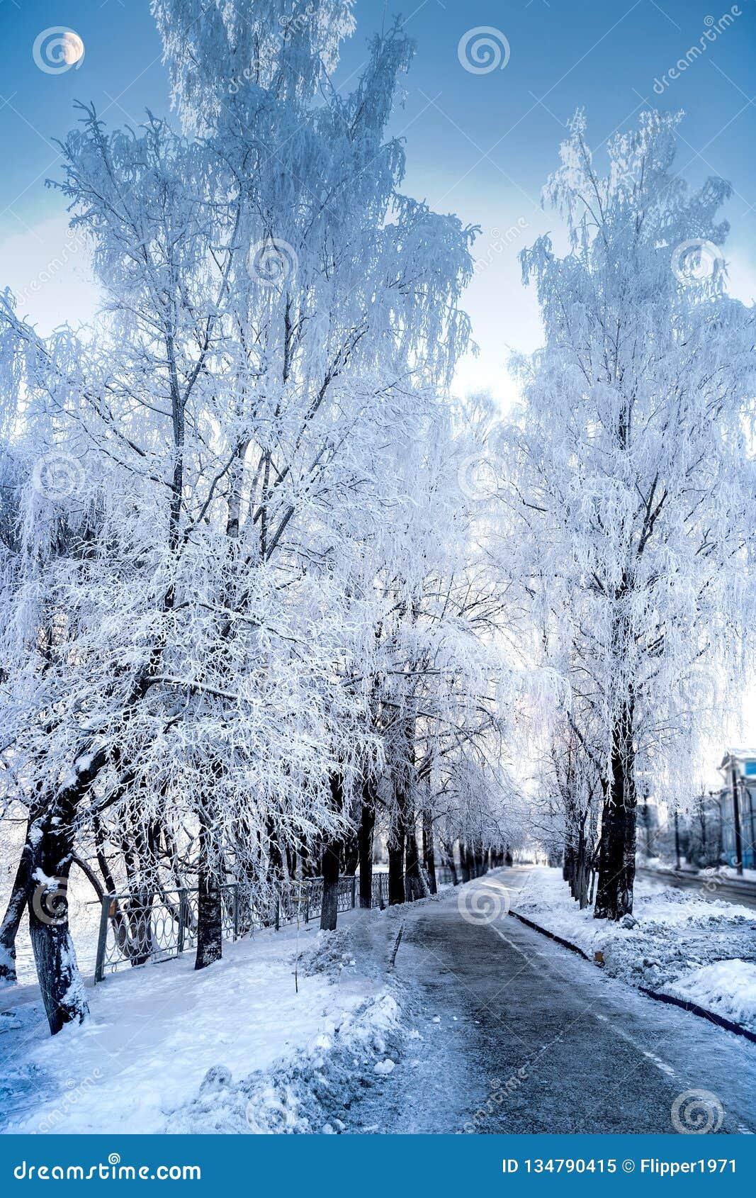 Vista increíble de árboles nevosos en un día escarchado del invierno