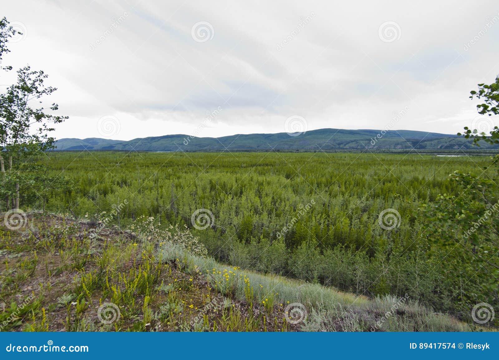 Vista larga do vale no Rio Yukon