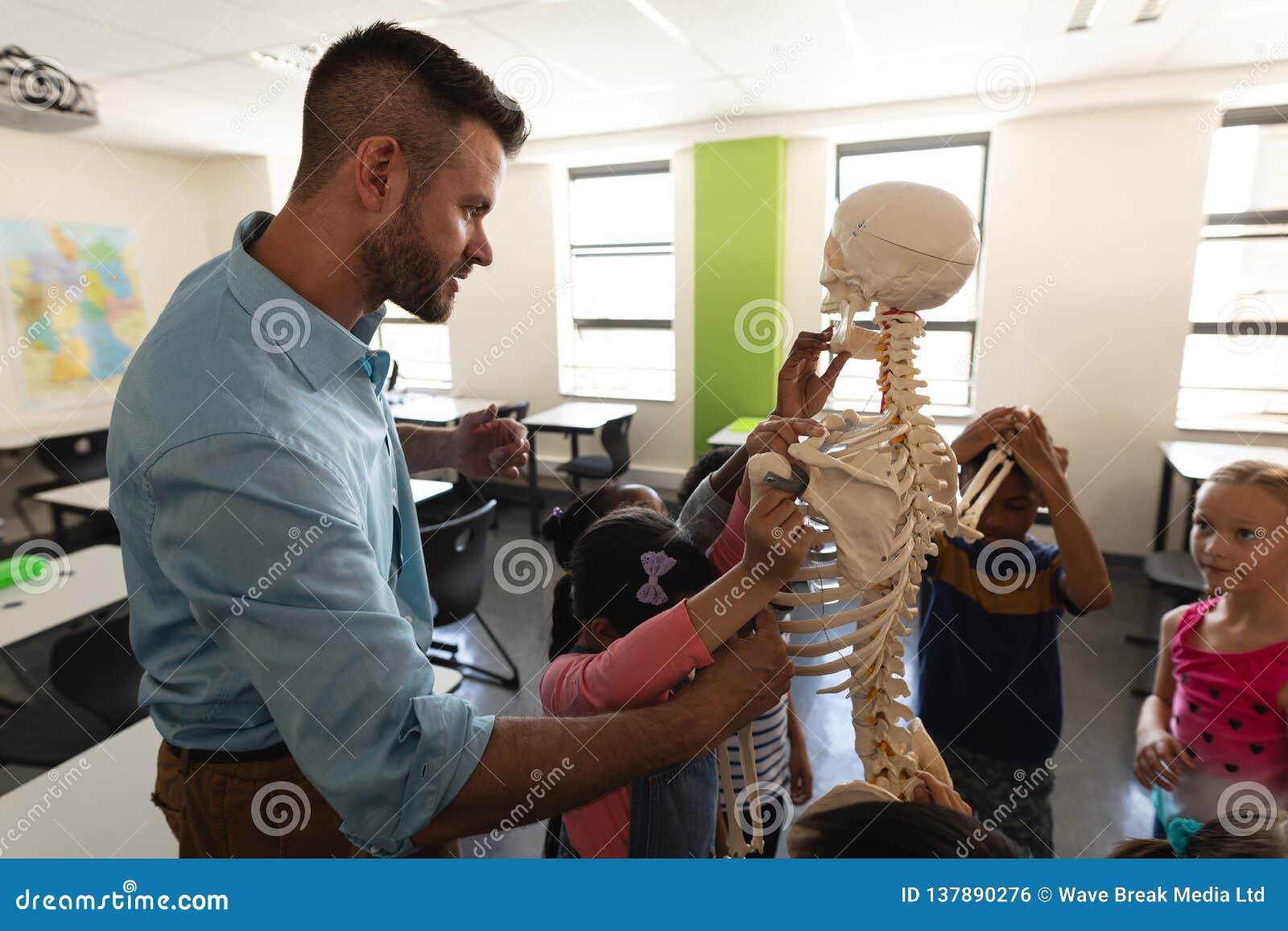 Vista laterale dell insegnante maschio che spiega modello di scheletro in aula