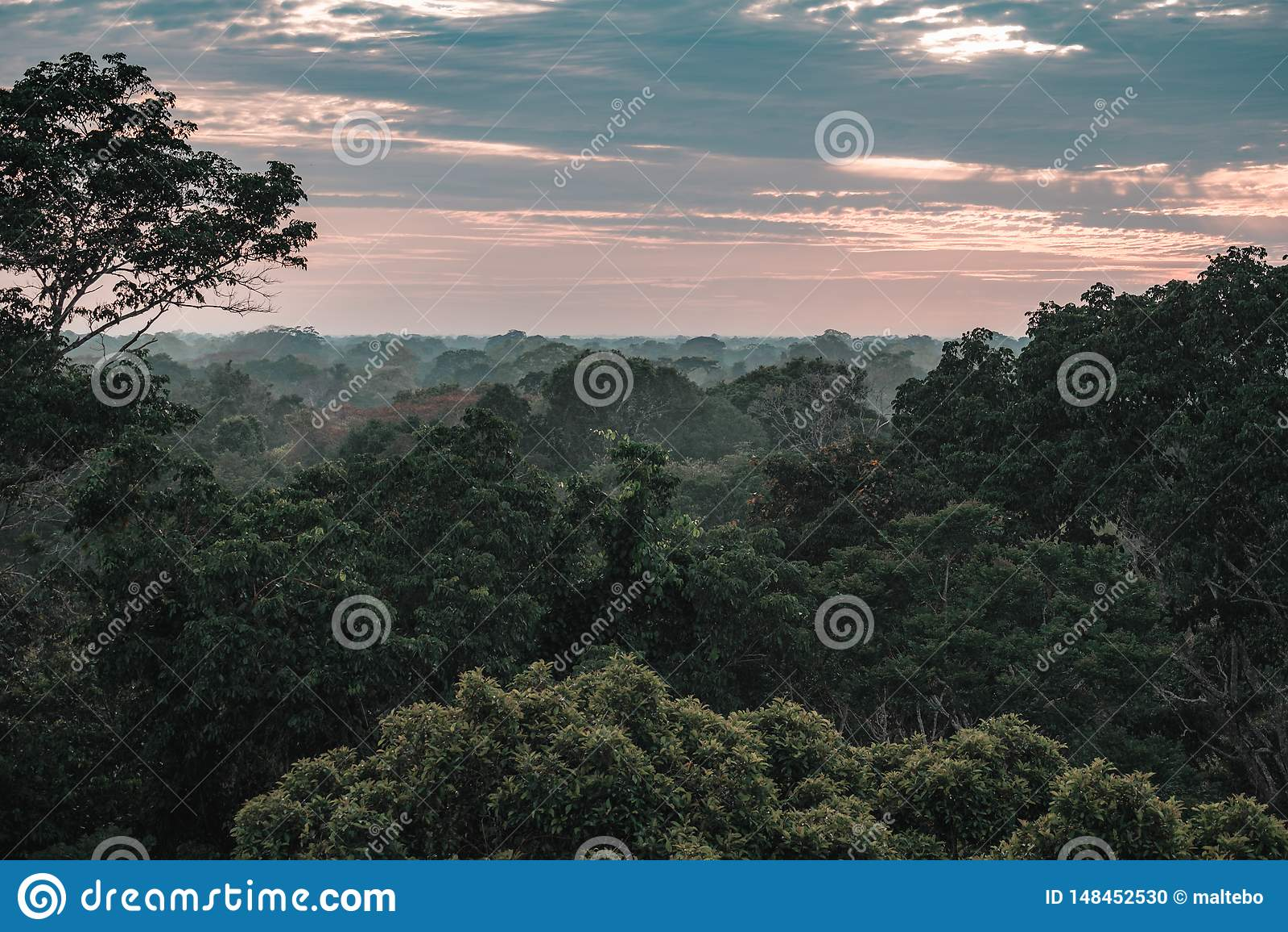 Vista na floresta úmida das Amazonas durante o por do sol