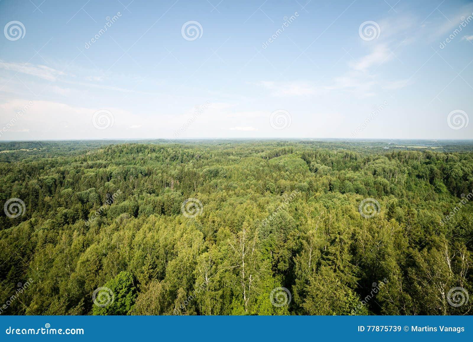 Vista Panorámica Del Horizonte Lejano Del Bosque Brumoso Foto de archivo