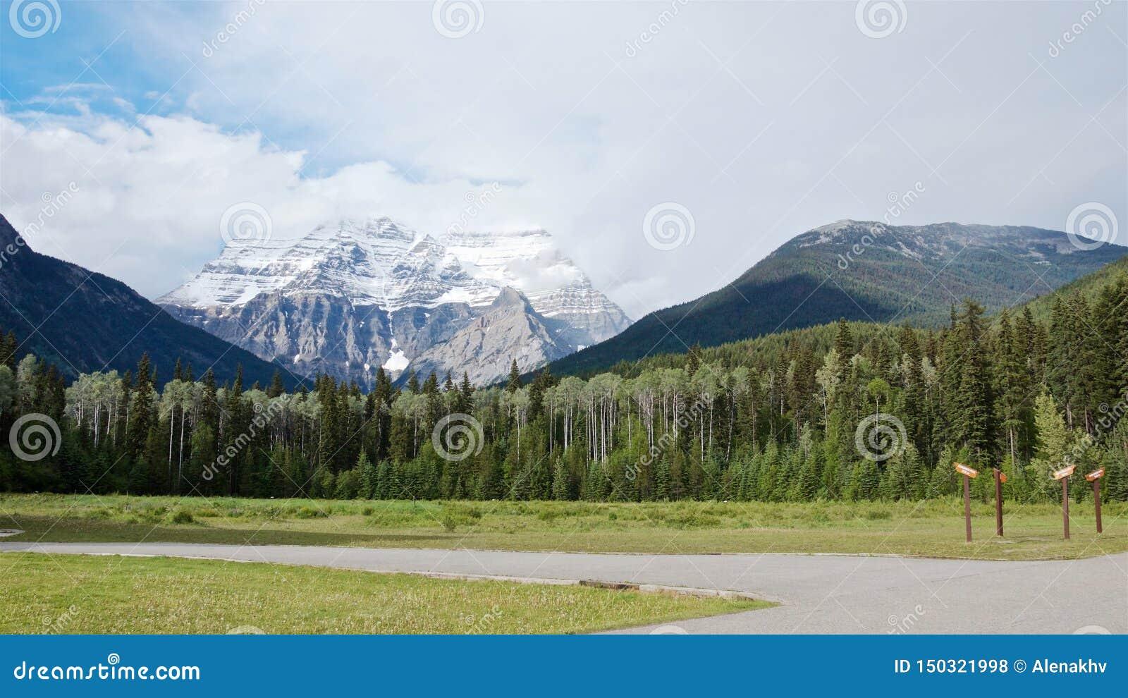 Vista panorâmica da floresta cênico da montanha e do pinho de Robson no verão