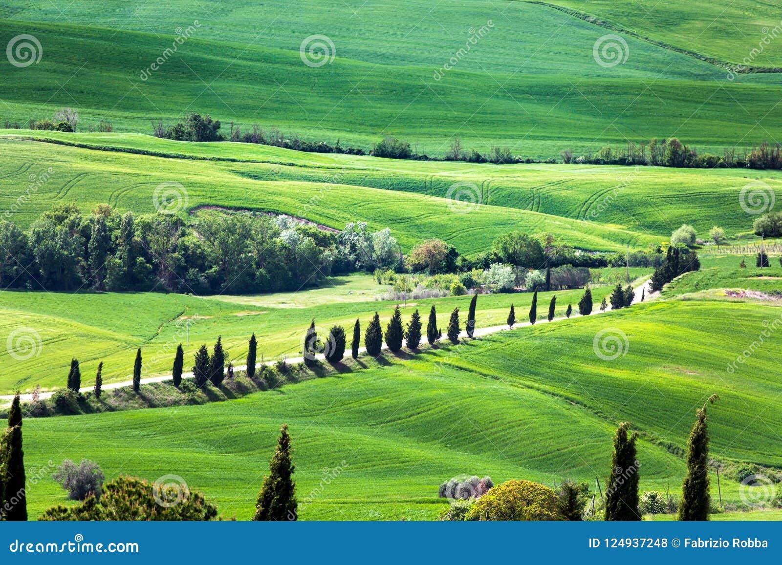 Vista panorâmica do campo típico de Toscânia com cipreste e prado, província de Siena, Itália
