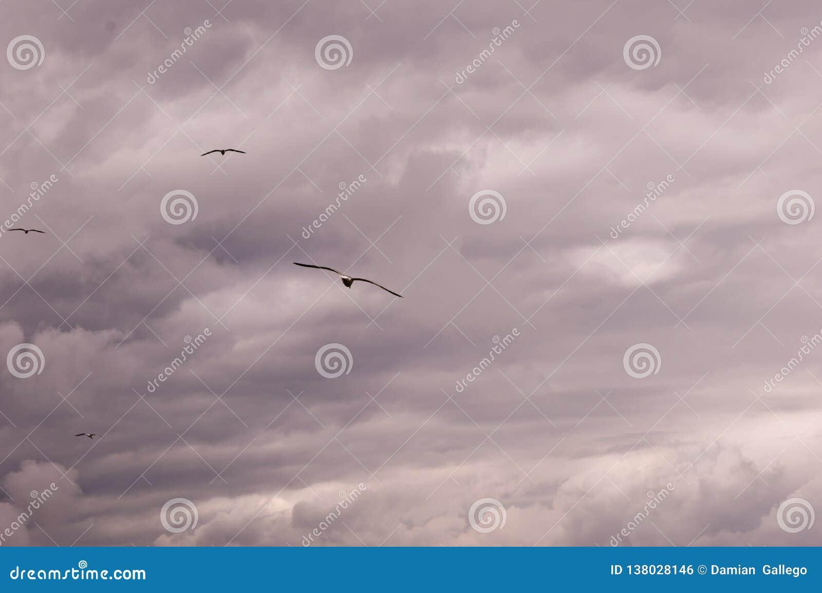 Vista panoramica di un gruppo di gabbiani che volano contro un cielo-scape tempestoso