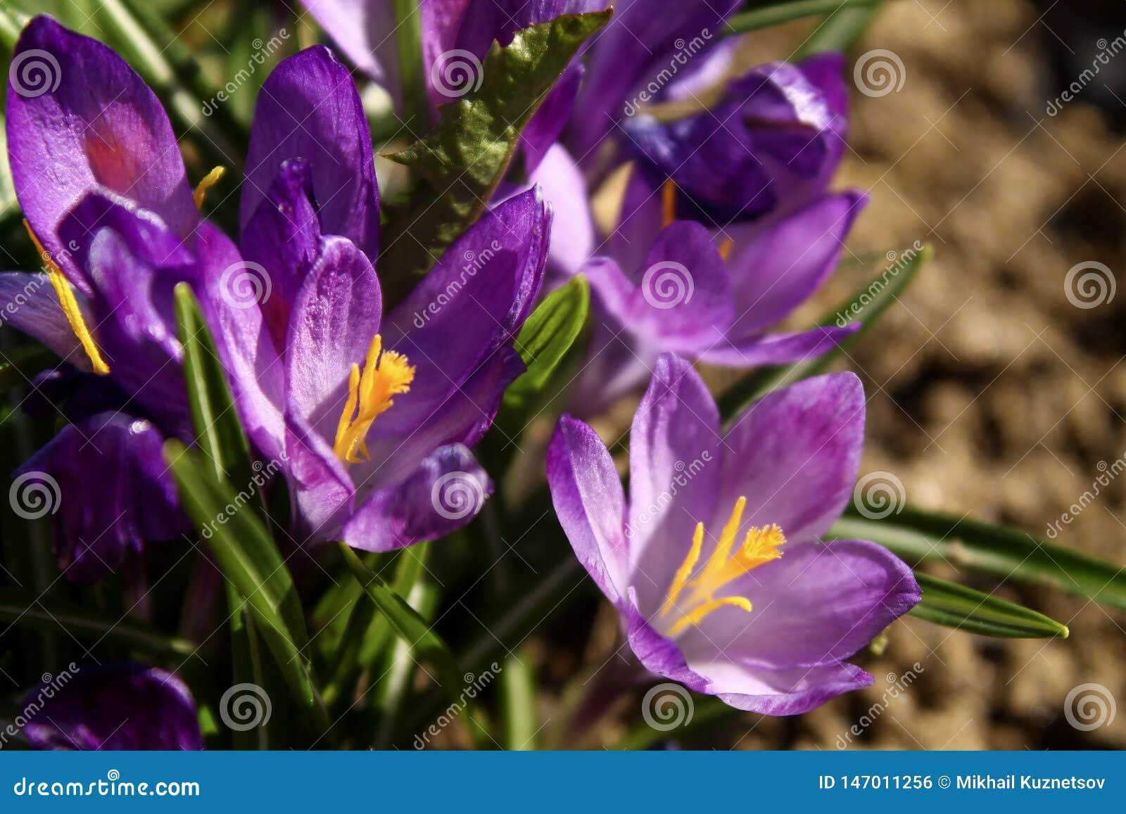 Vista próxima de uma flor pequena da campânula