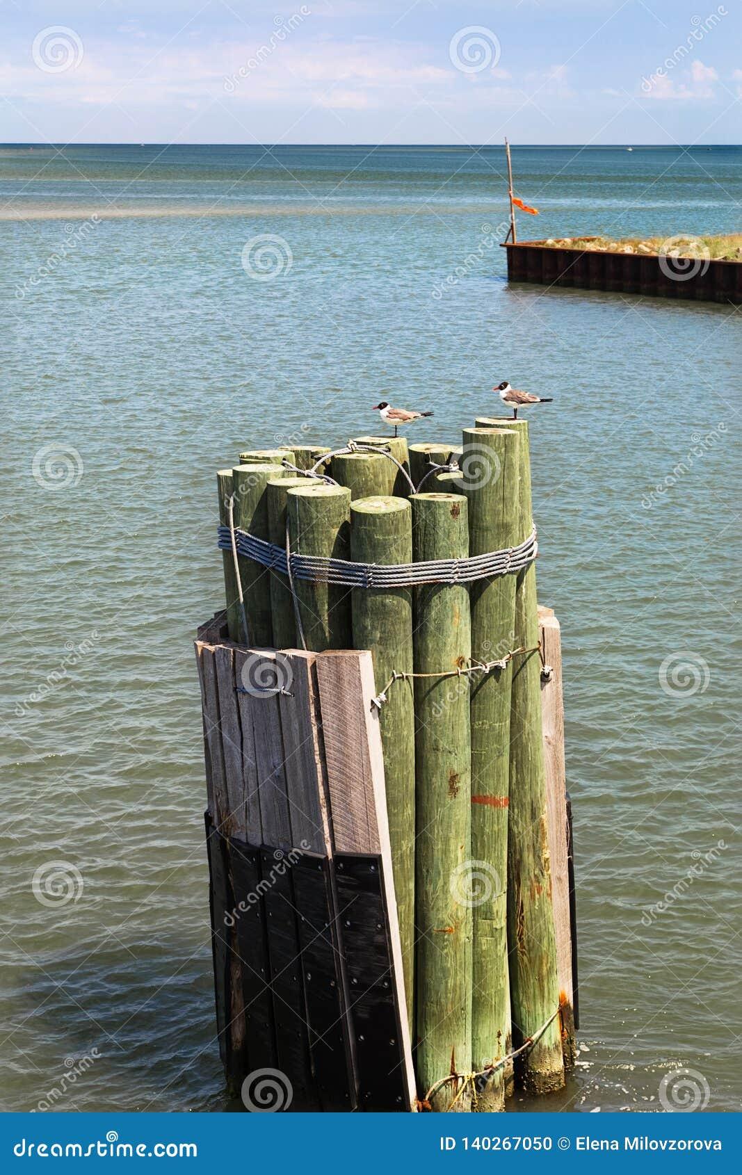 Vista sul mare con i pali ed i gabbiani di legno