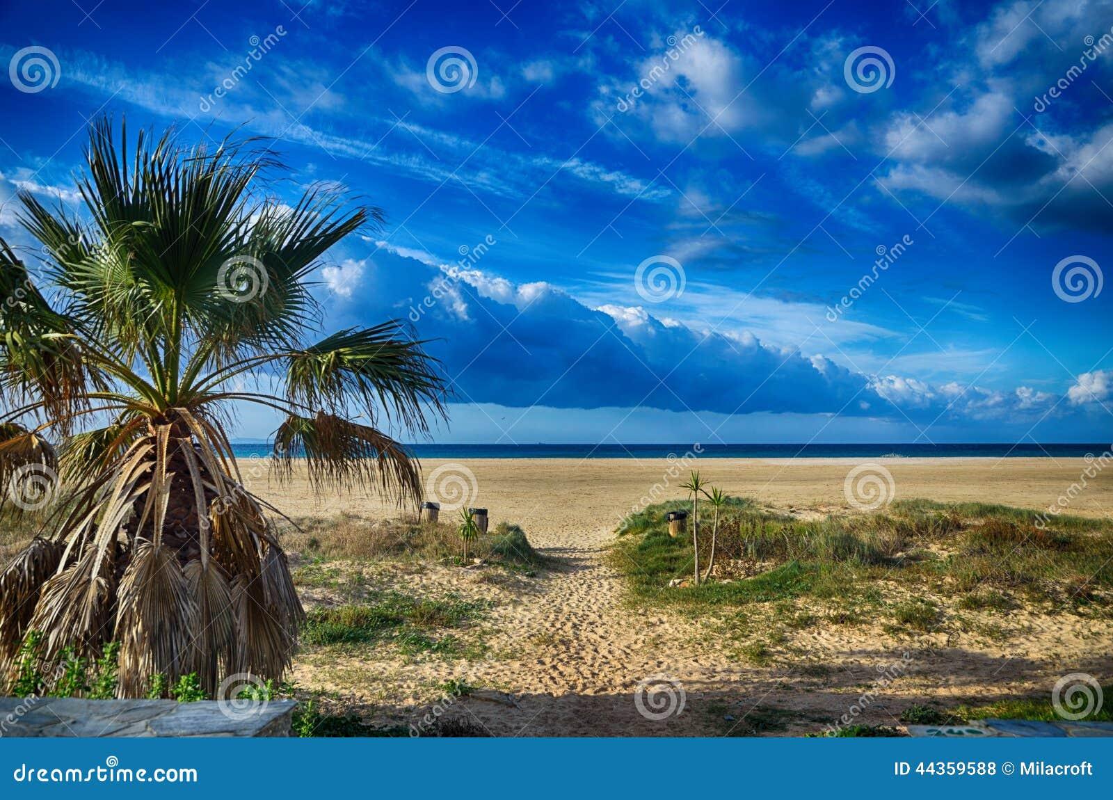 Vista sul mare con la spiaggia e le palme