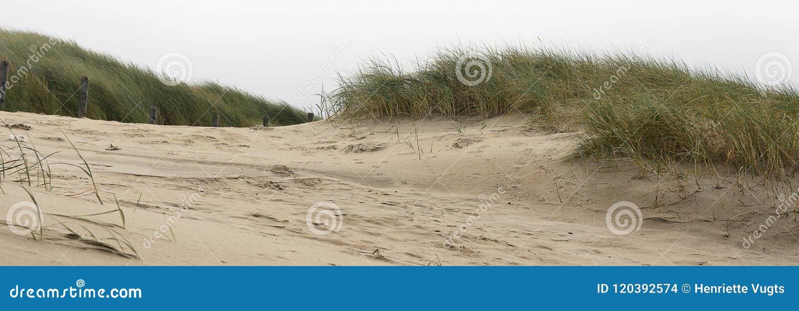 Vista sulle dune e sullo sparto pungente nella zona costiera alla costa ovest dei Paesi Bassi