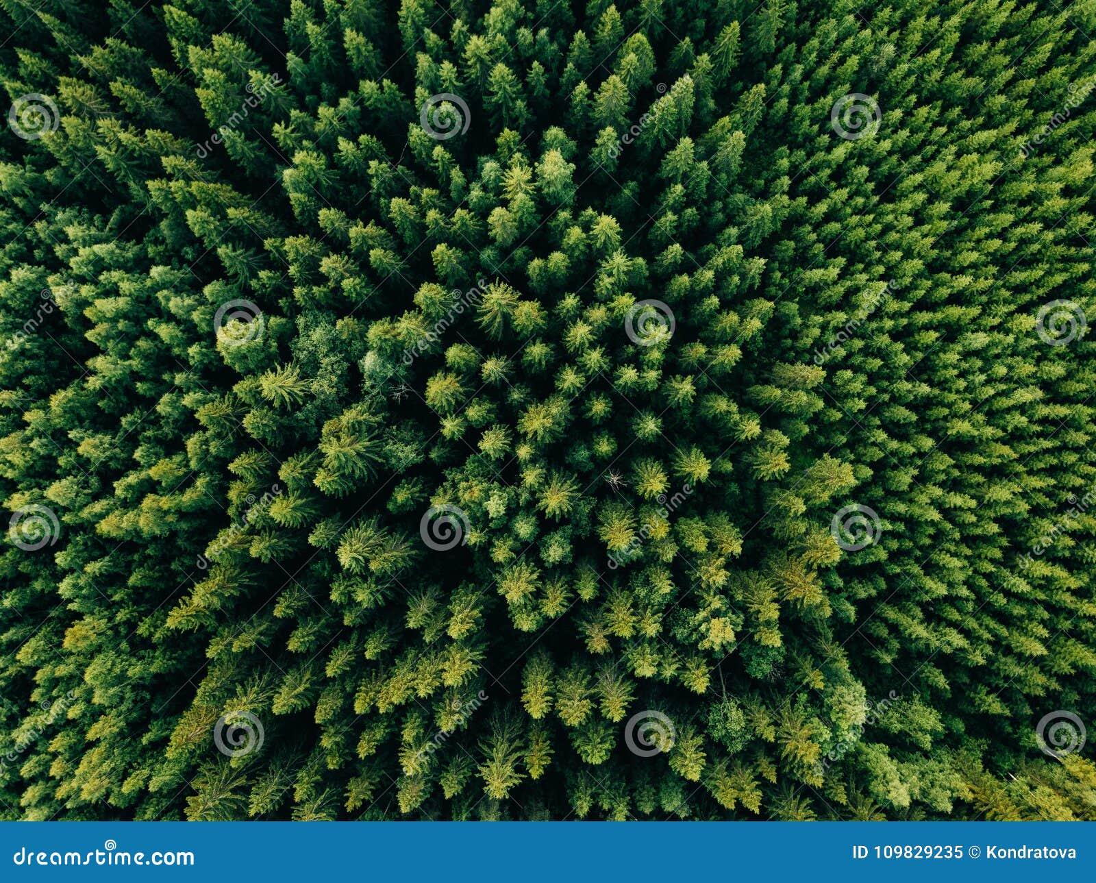 Vista superiore aerea degli alberi di verde di estate in foresta in Finlandia rurale