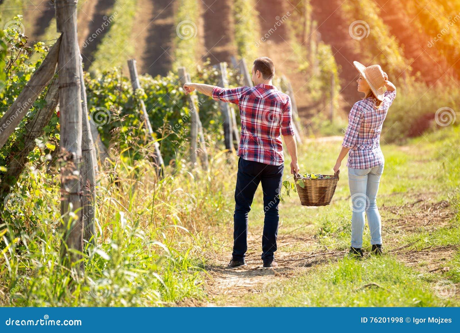 Vista trasera de los pares jovenes que caminan en el viñedo