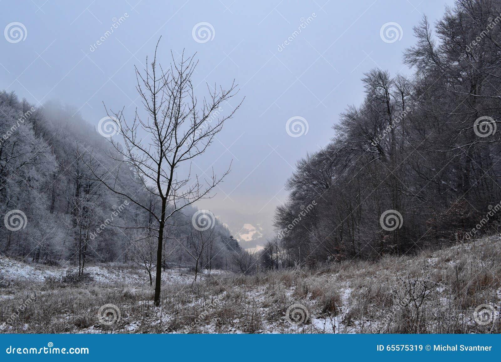 Vista a um vale entre árvores no inverno