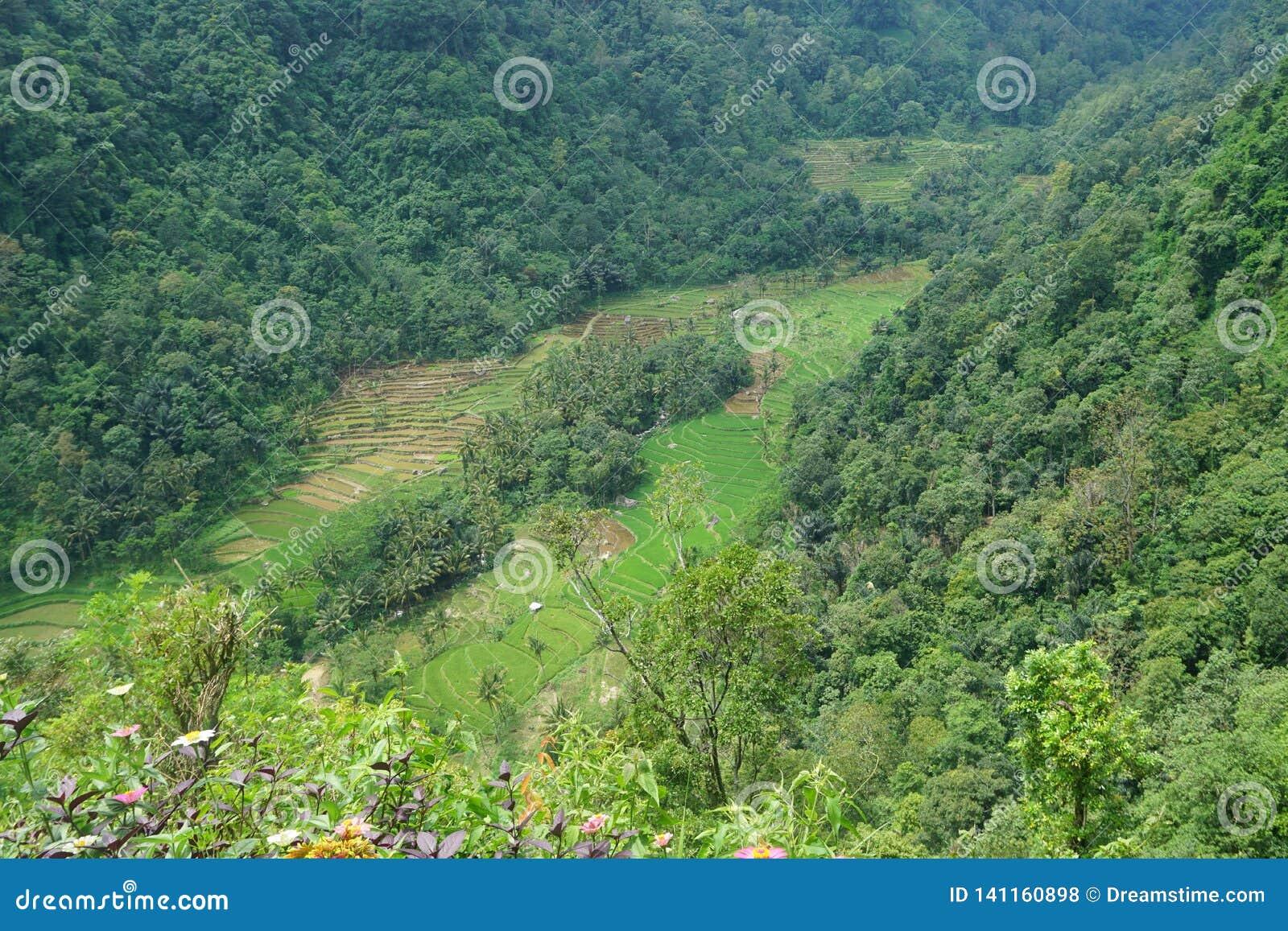Vistas de los campos colgantes del arroz