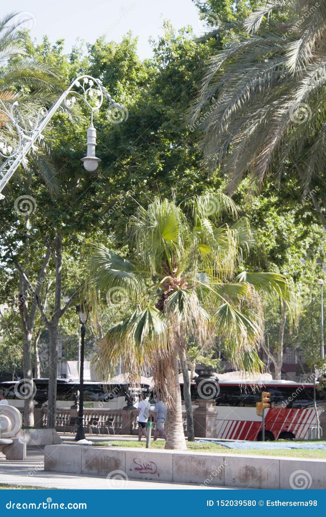 Viste di Barcellona Natura ed elementi fatti dall essere umano