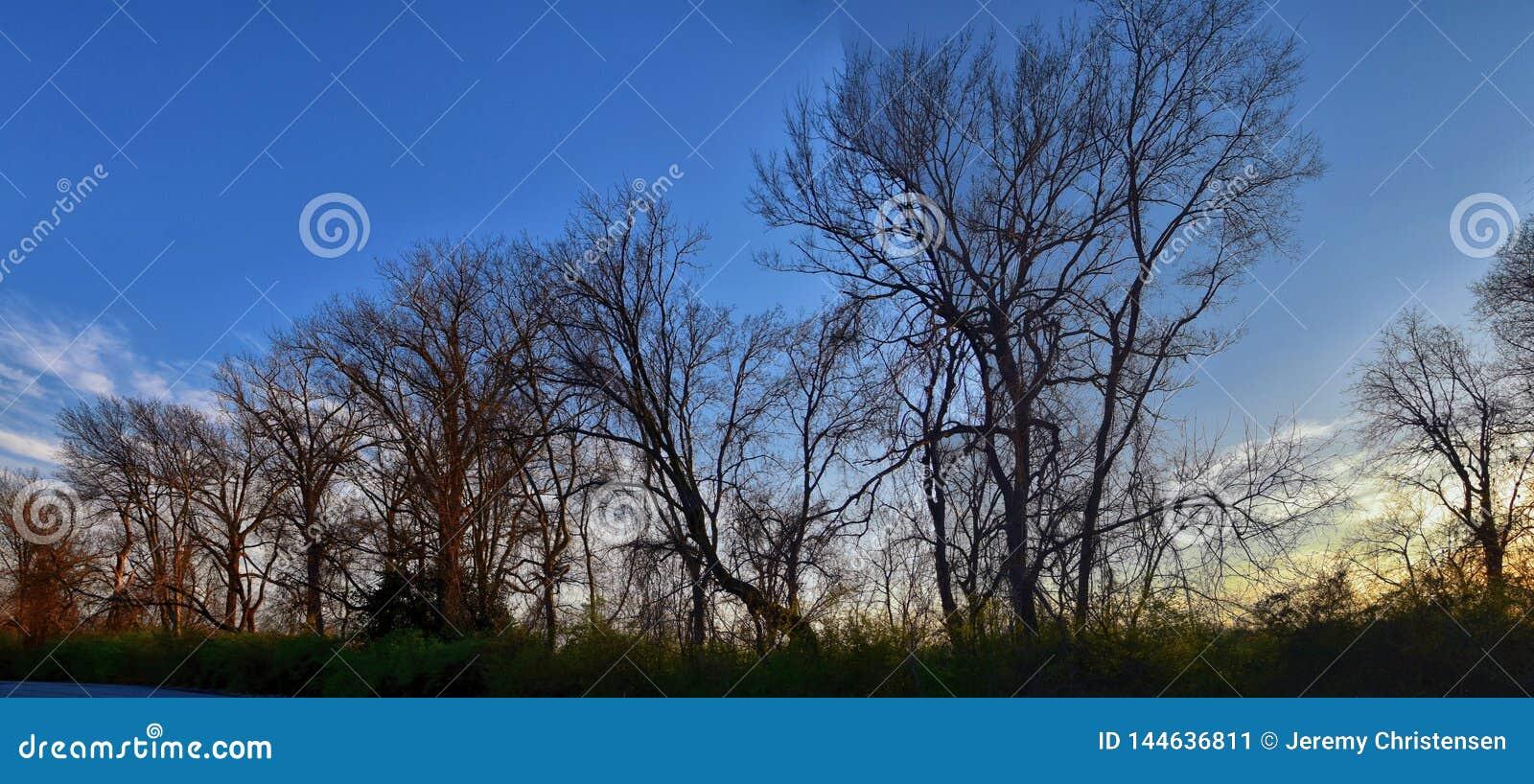 Viste di tramonto di crepuscolo attraverso i rami di albero di inverno da Opryland lungo Shelby Bottoms Greenway e l area natural
