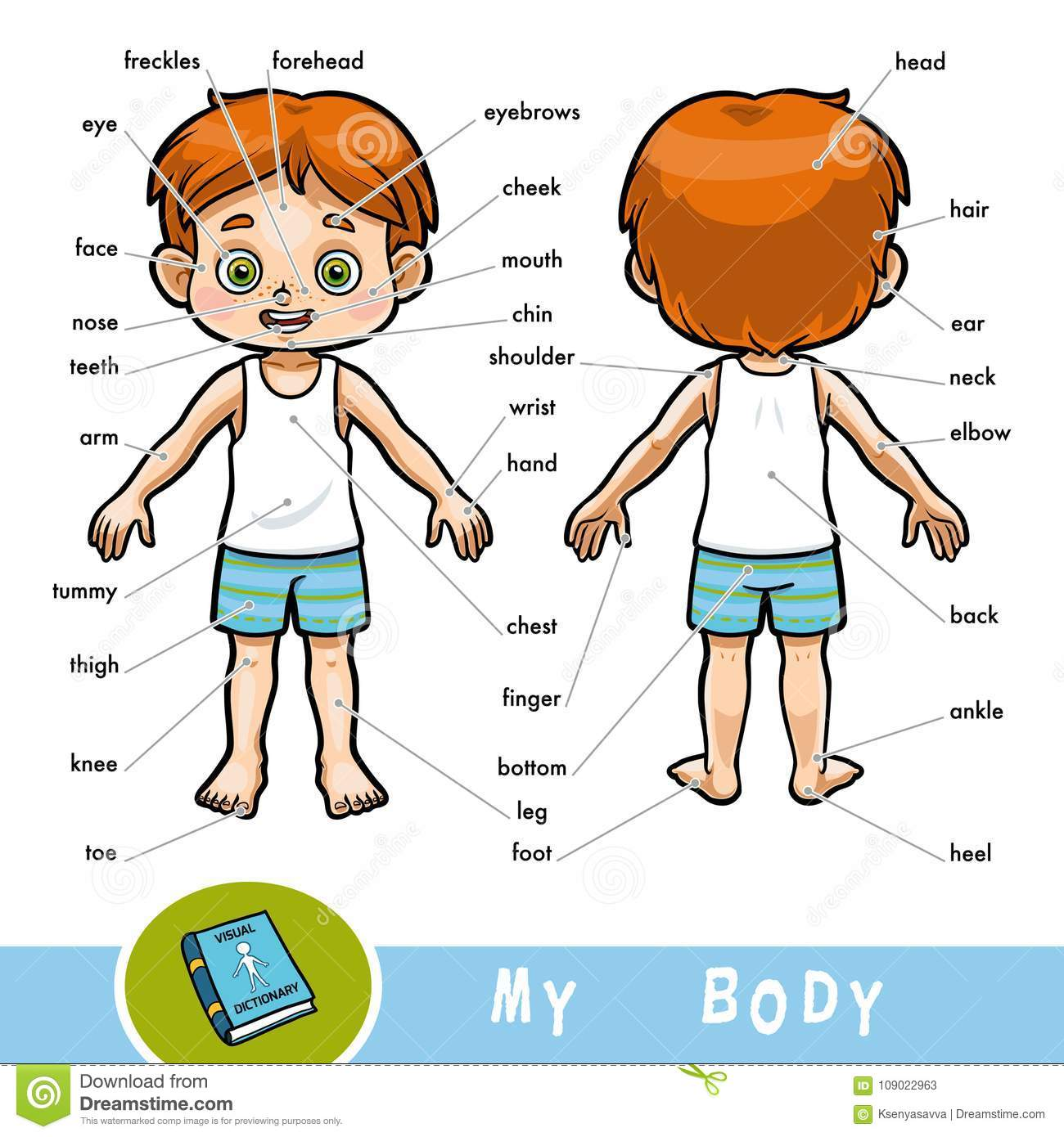 Visual Dictionary For Children About The Human Body, The Boy Stock ...